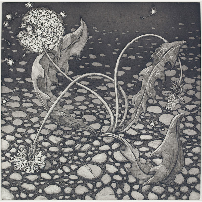 """Weed , 2010 etching 17 x 16"""" paper 19.5 x 18.5"""" framed Edition of 10 SOLD"""