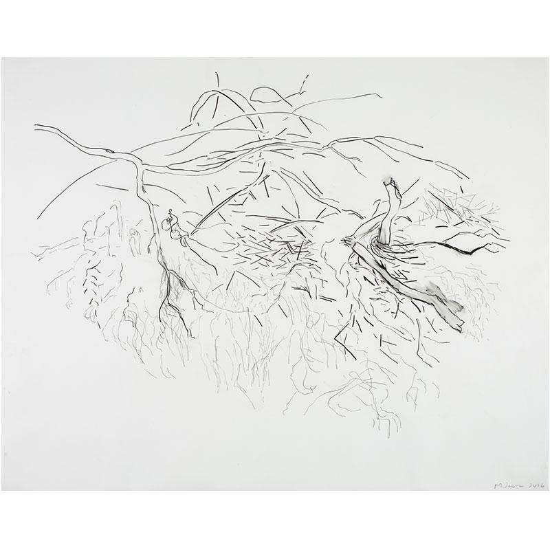 "Malia Jensen   Landscape 10 (Gales Creek) , 2016 pen, pencil on vellum 20.5 x 25.5"""