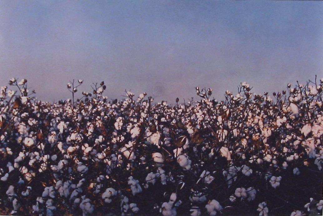 "Untitled , 1992 dye-transfer print 12 x 18"" Edition of 5"