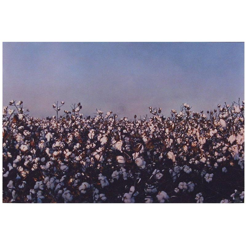 "Untitled - WEg 3  , 1992 dye-transfer print 12 x 18"" Edition of 5  Inquire >"