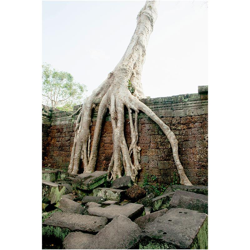 "Angkor XIV , 2018 assembled archival inkjet print 18 x 27"" image"