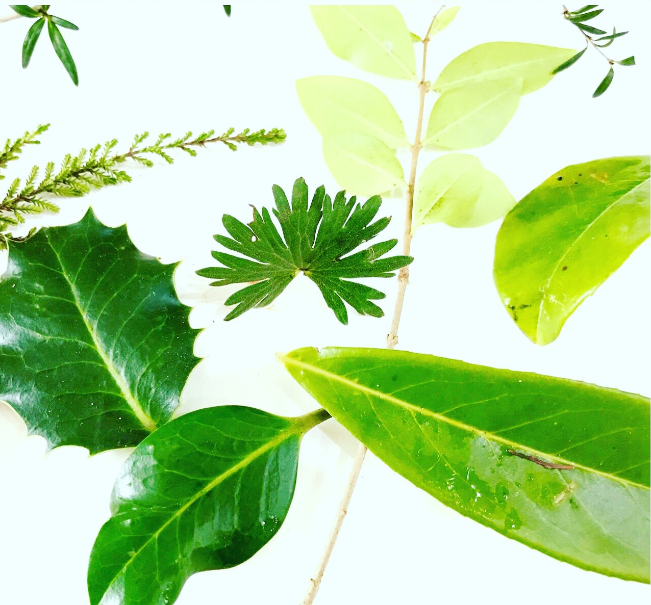 Samples of the lovely leaves, branches and twigs from the garden.