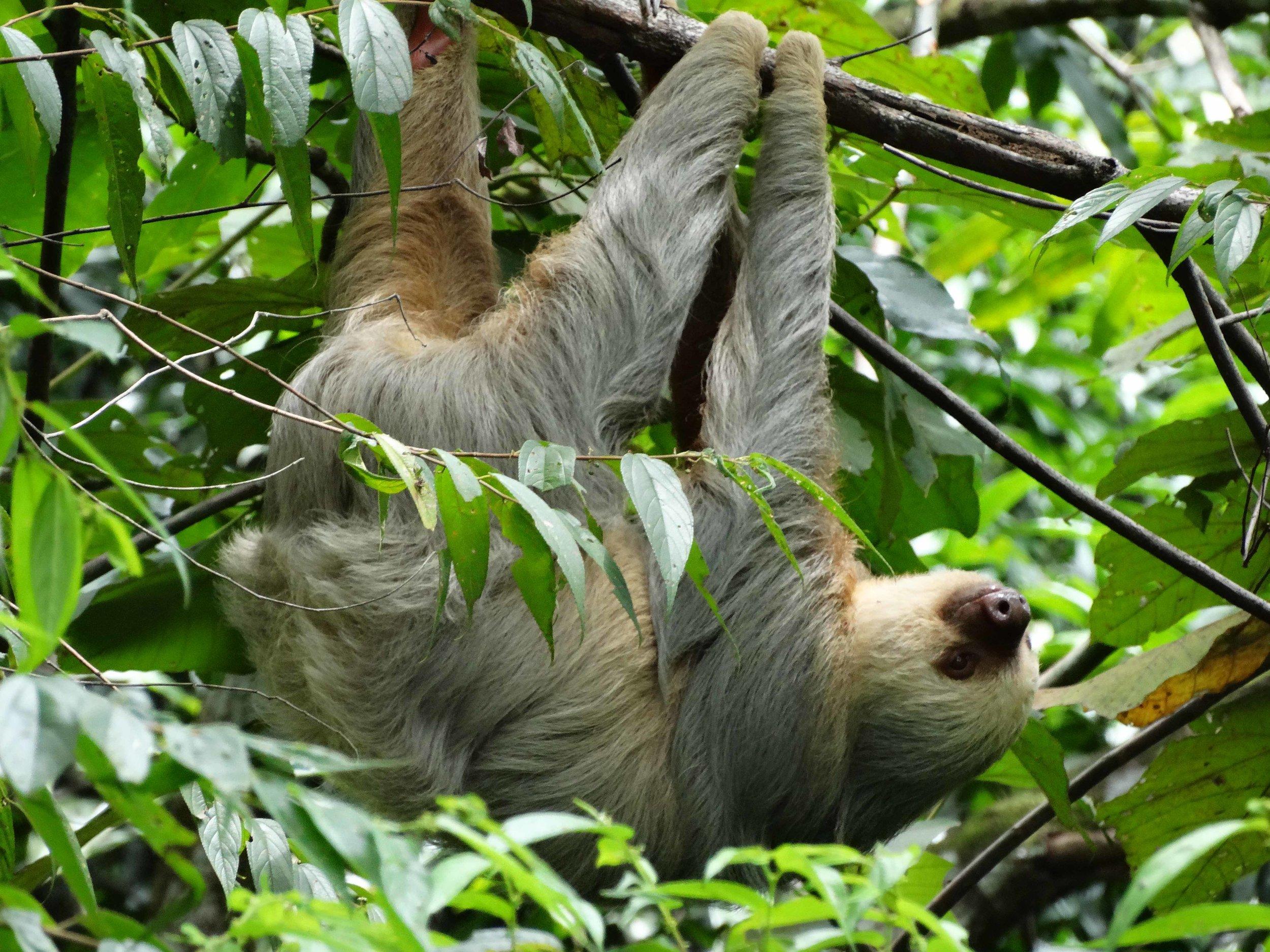 Manuel Antonio National Park - Most visited park in Costa Rica