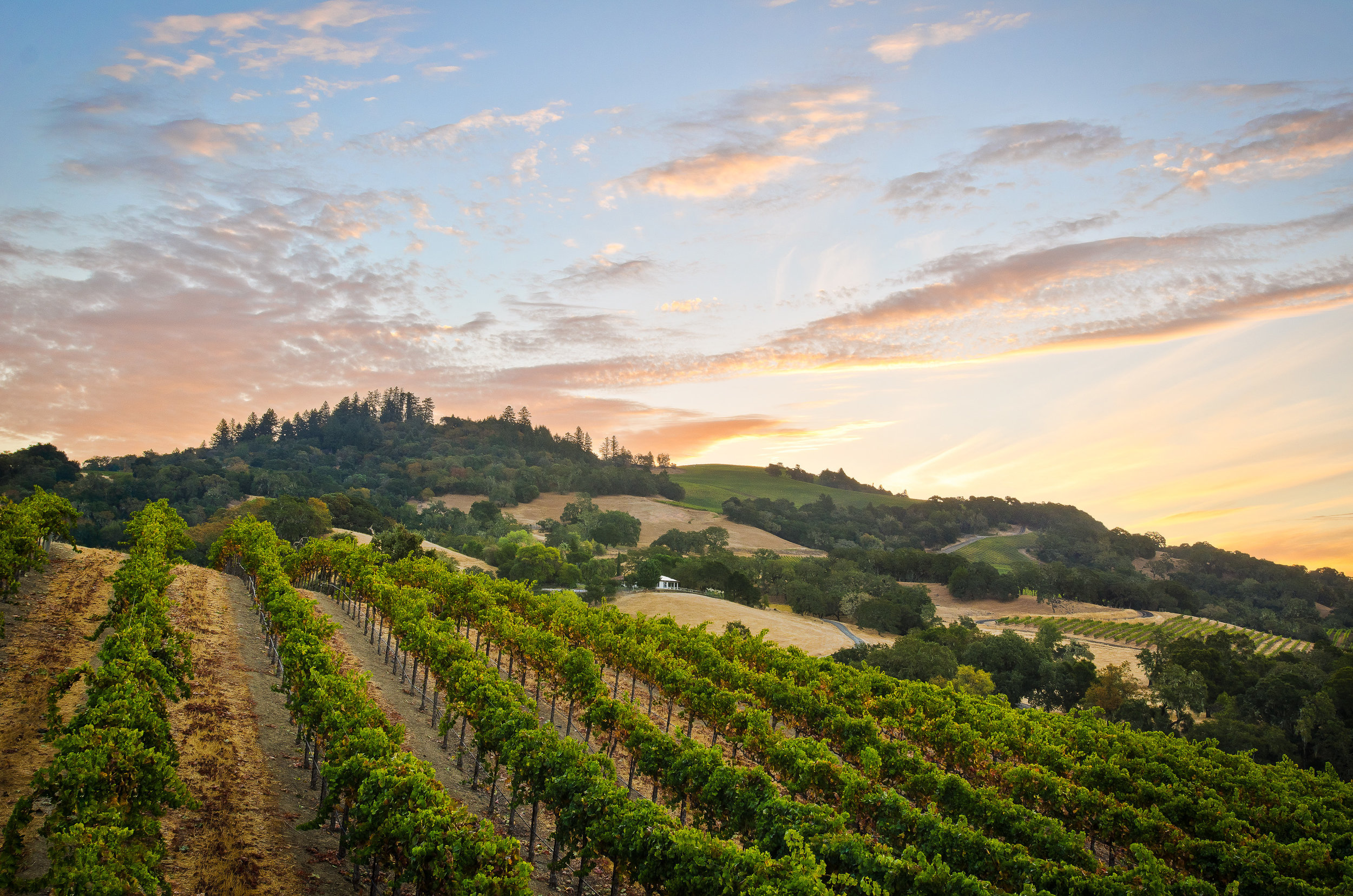 Wine country - A study in Landscape, Architecture and Lifestyle.
