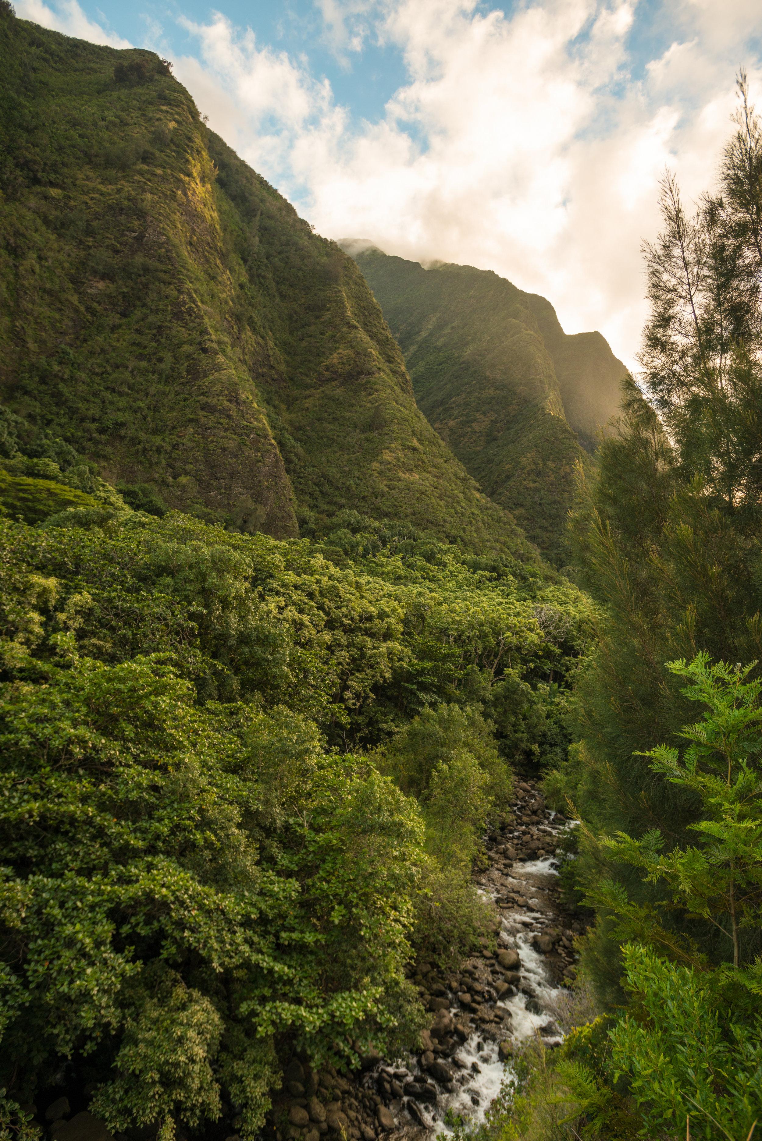Chris_Majors_Maui-8516.jpg
