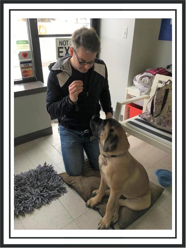 2019_April_sunday event series_pet training.png