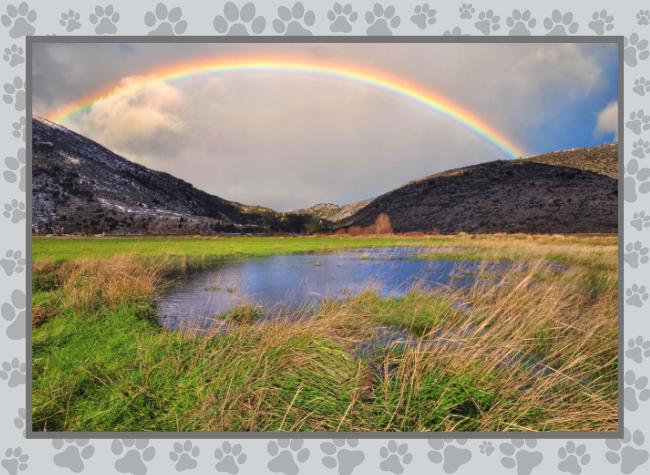 Rainbow bridge -