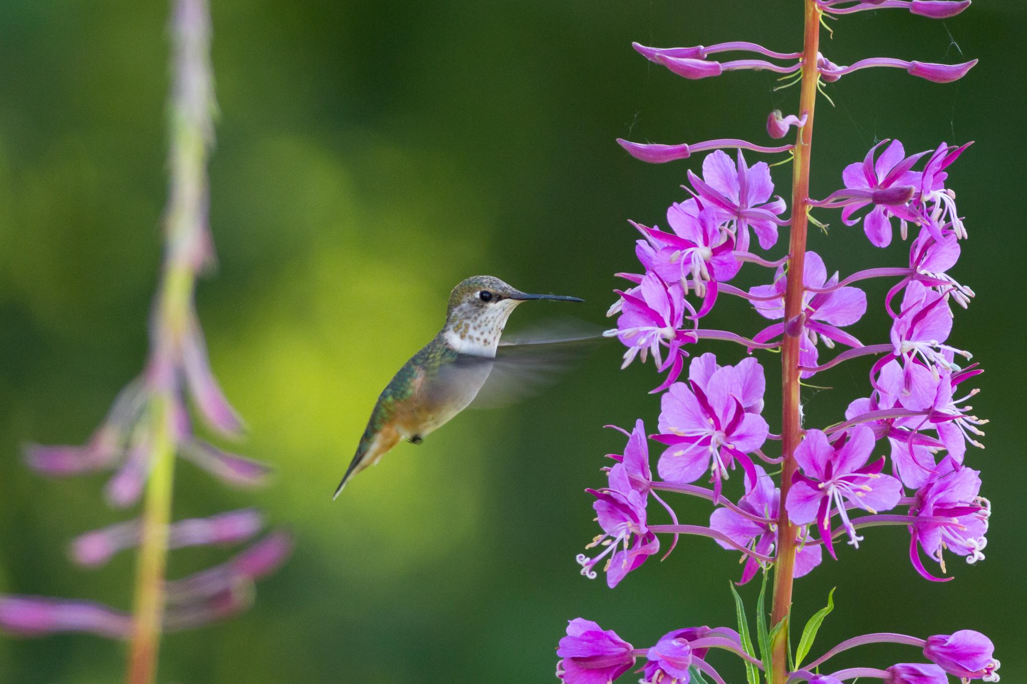Birding on the Eastside