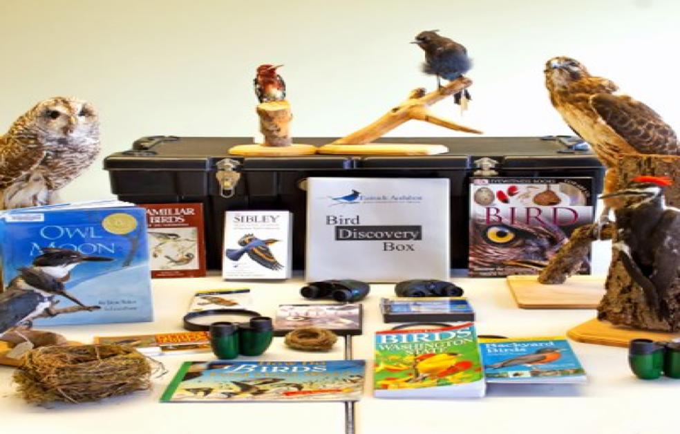 Bird Discovery Box