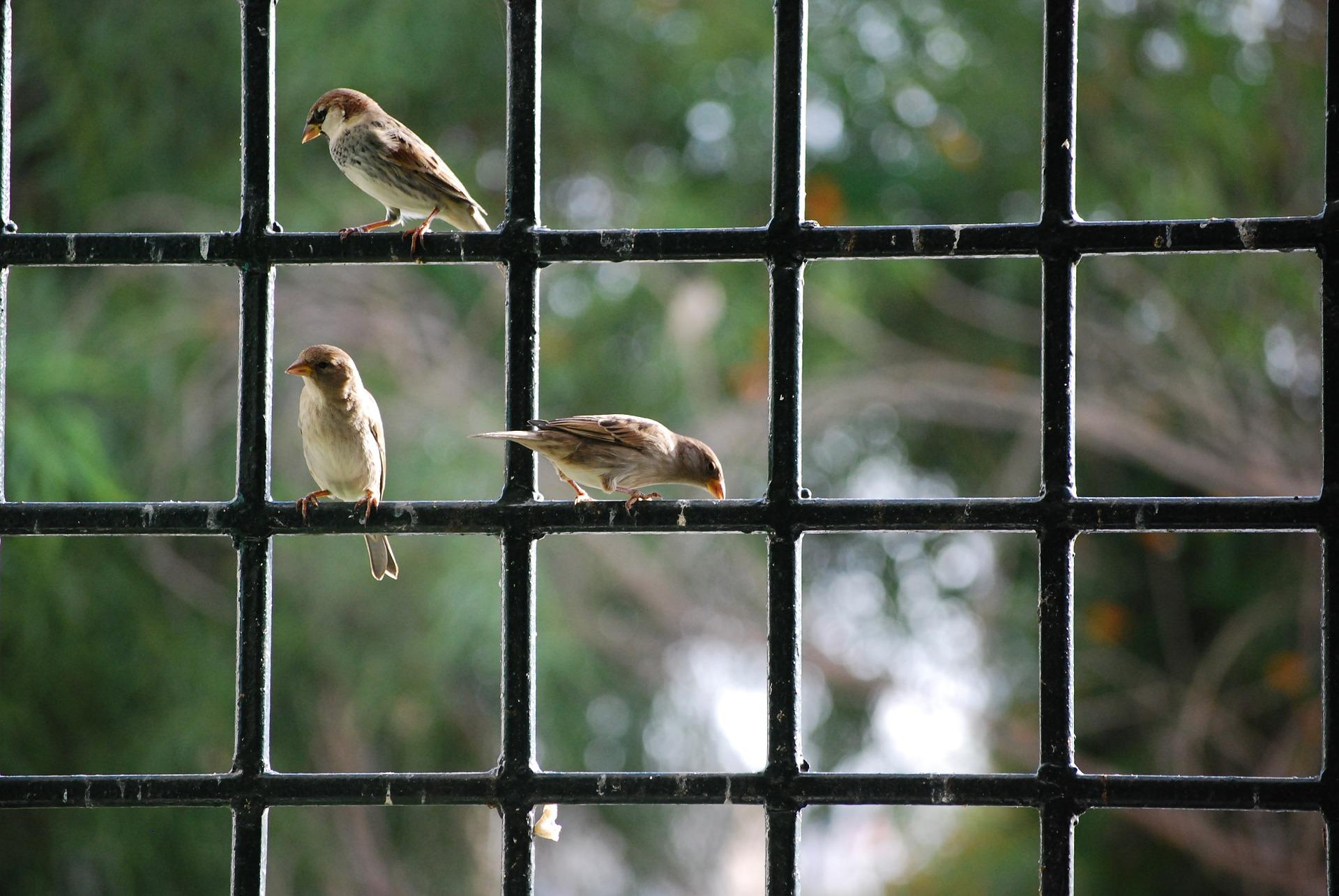 sparrow-806176_1920.jpg