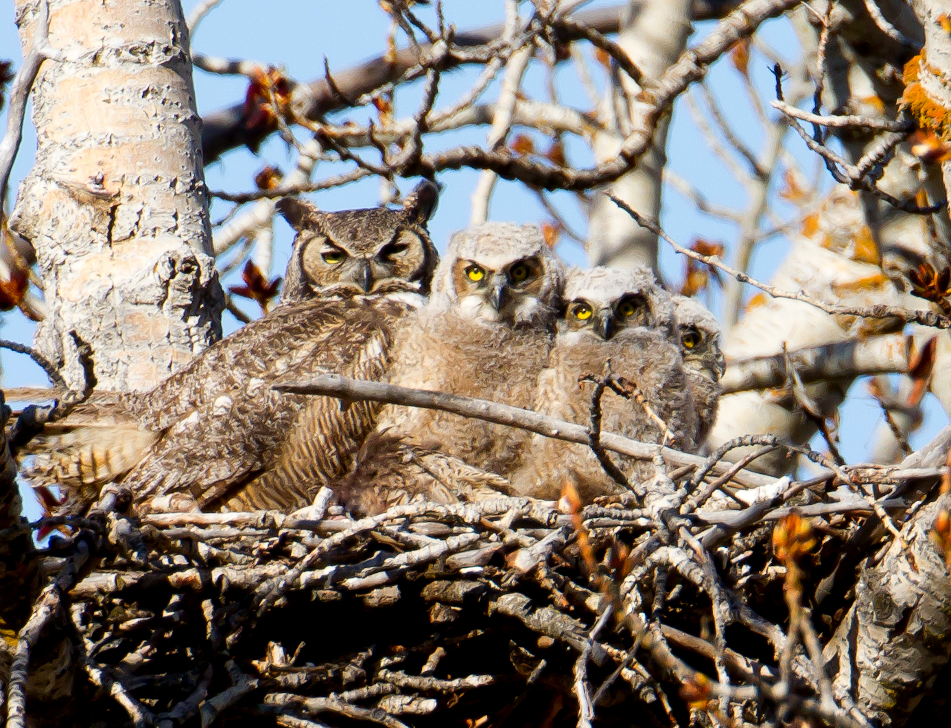 PC: Mick Thompson (Great Horned Owl)