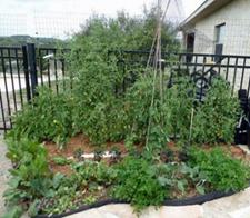Veggie Garden for Two
