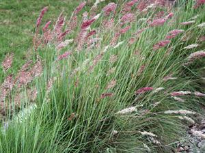 ruby_grass.jpg