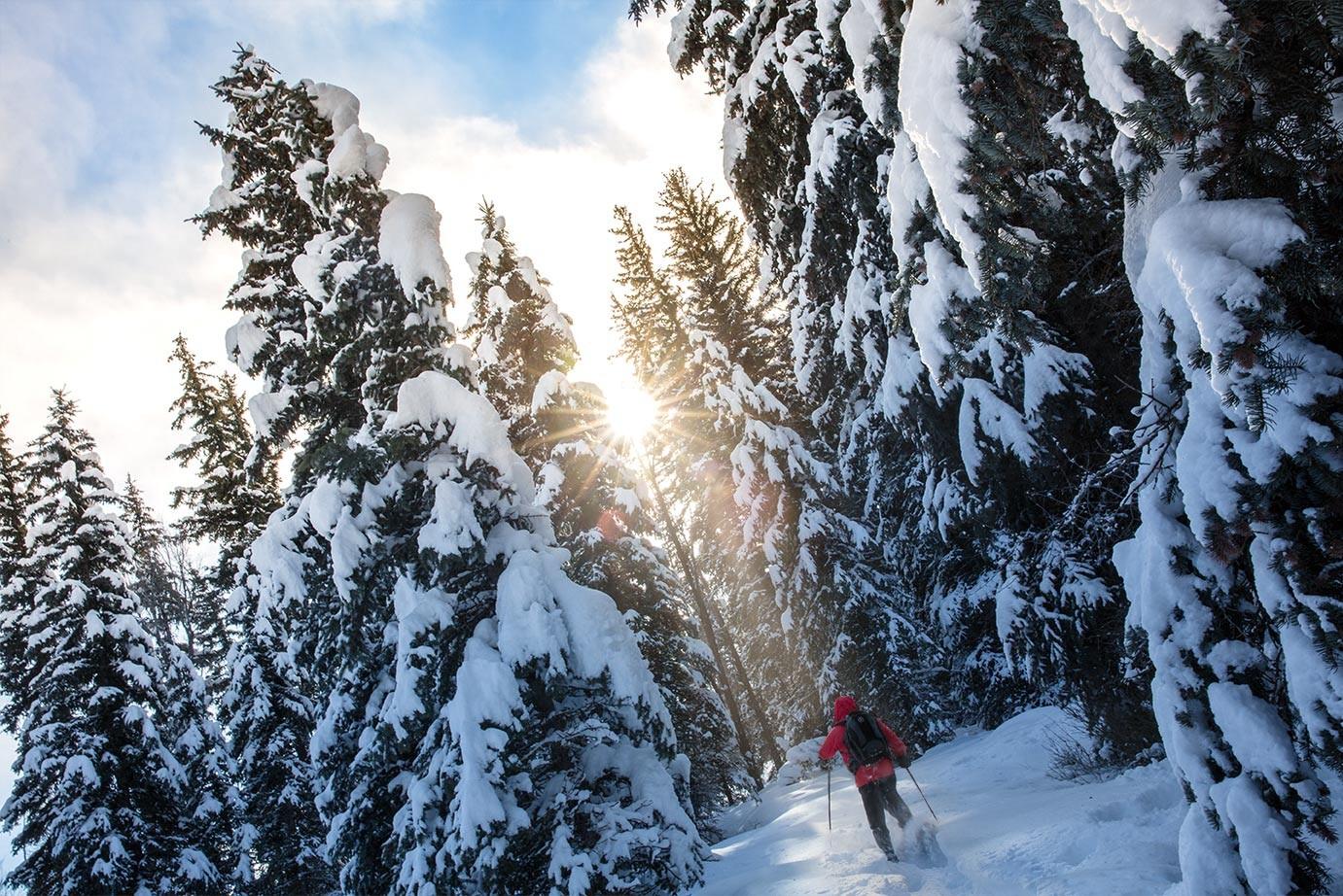 snowshoeing-trees-sun-web-1381x922.jpg