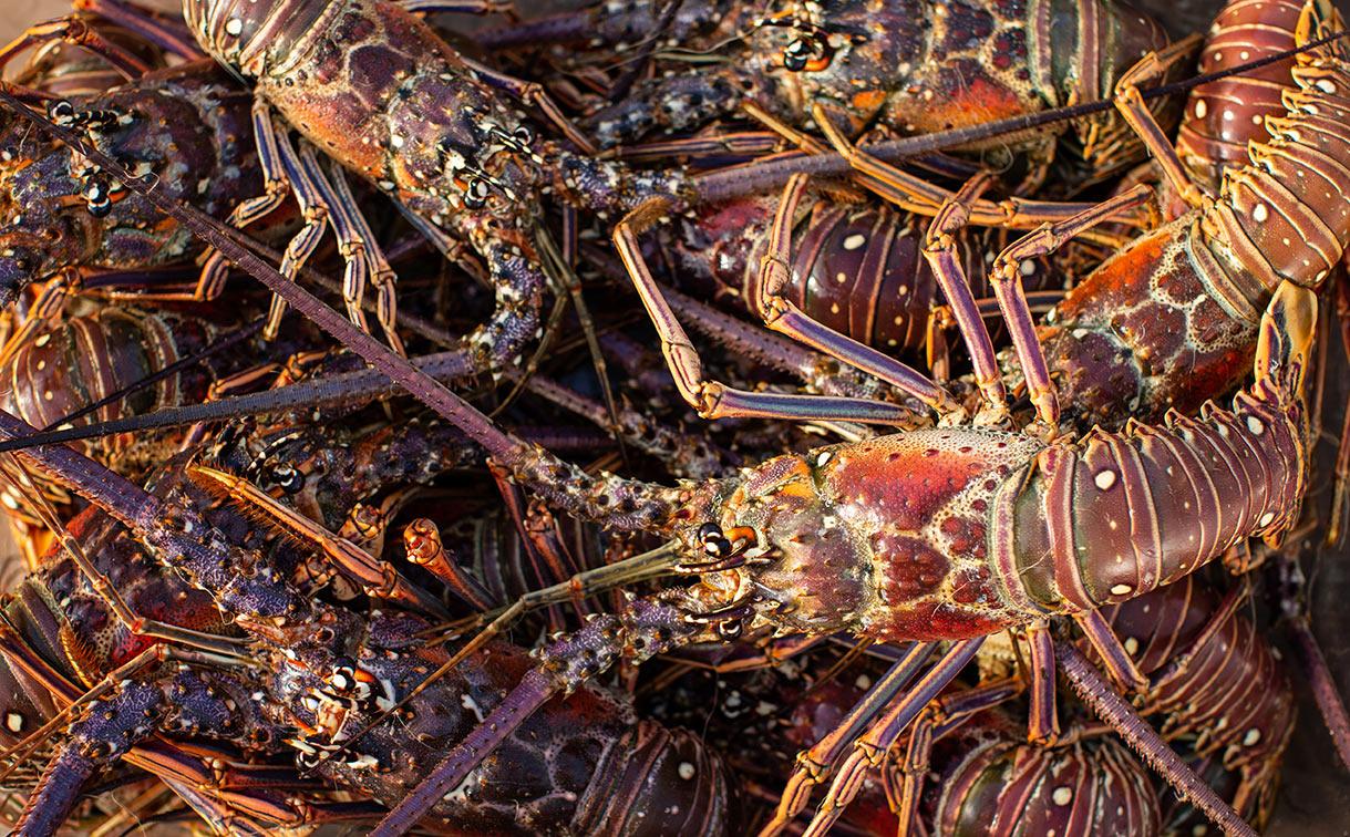 lobster-joejenkin-photography.jpg