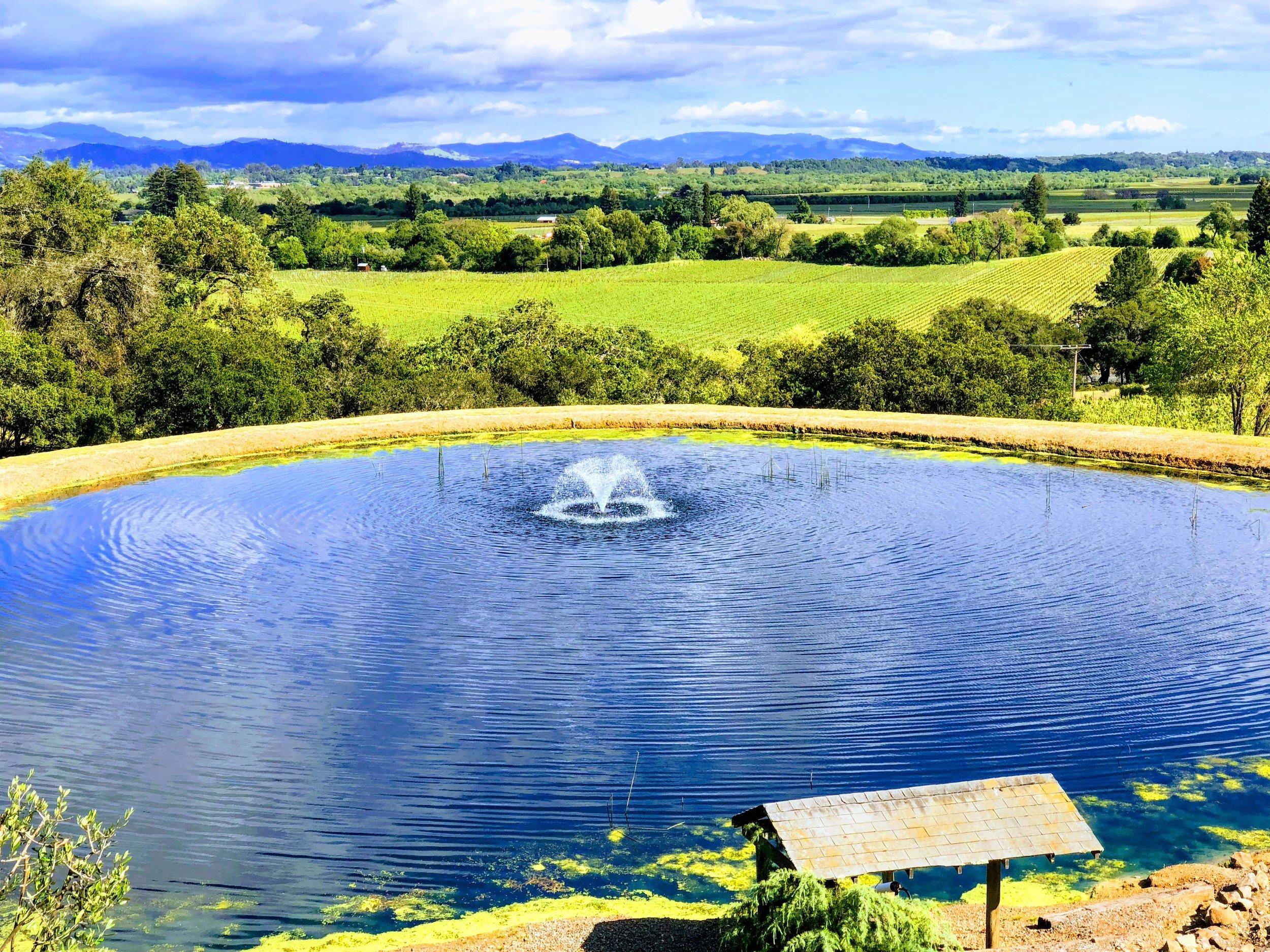 Armida Winery Pond Views