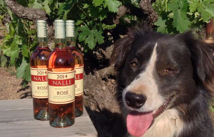 Nalle Winery Dog Approved