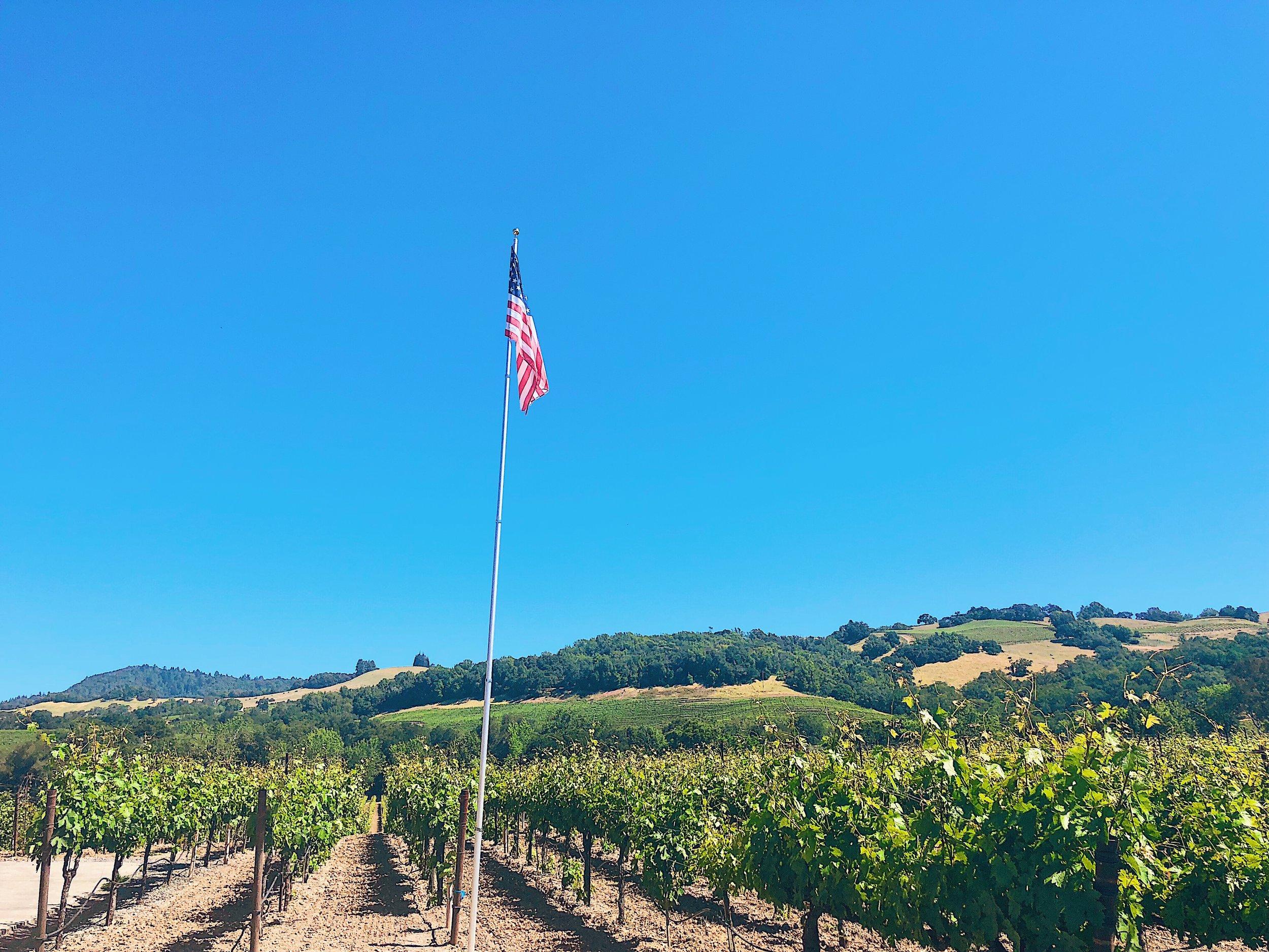 Vineyard Views At Viszlay