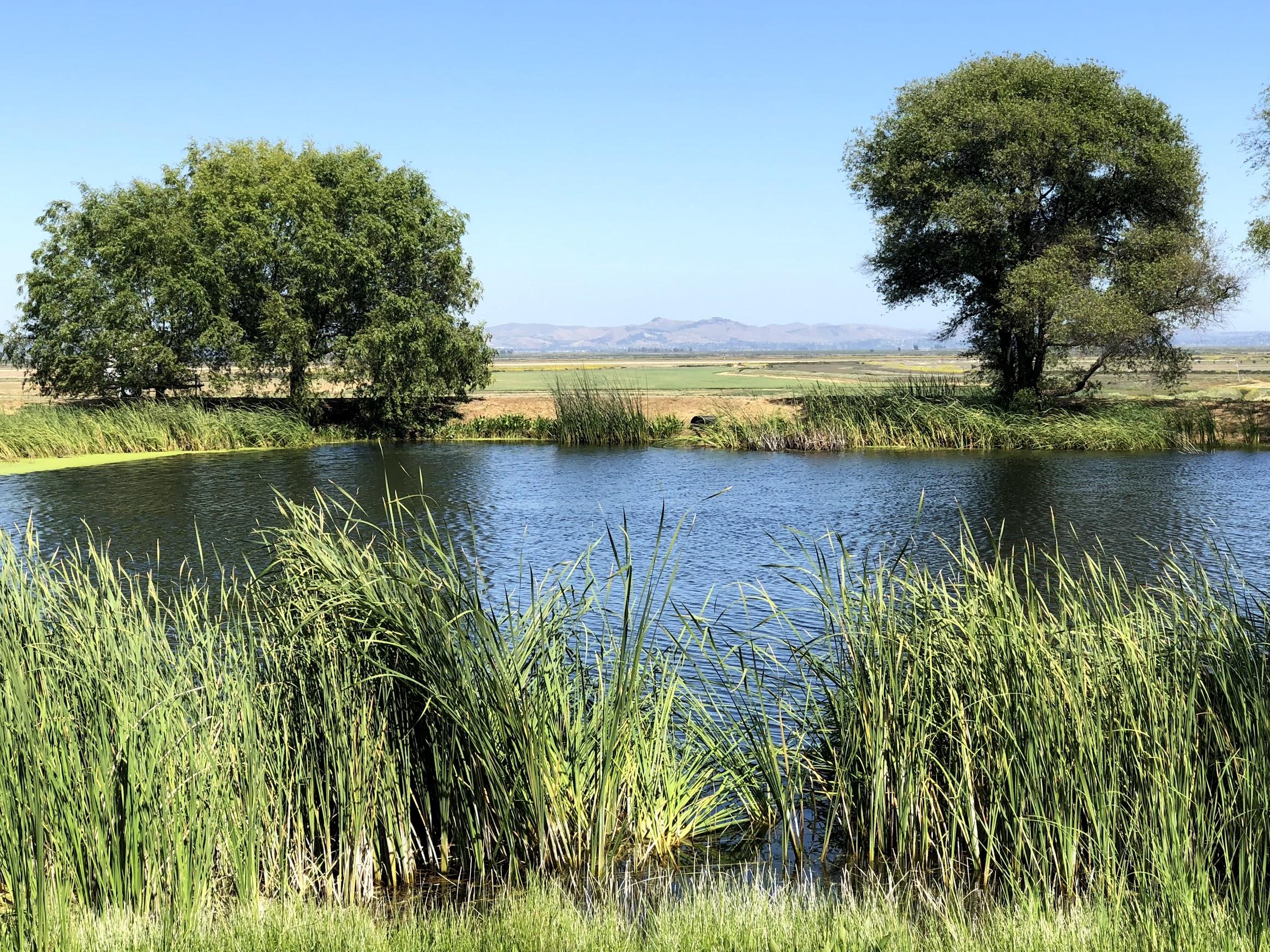 Pond At Ram's Gate