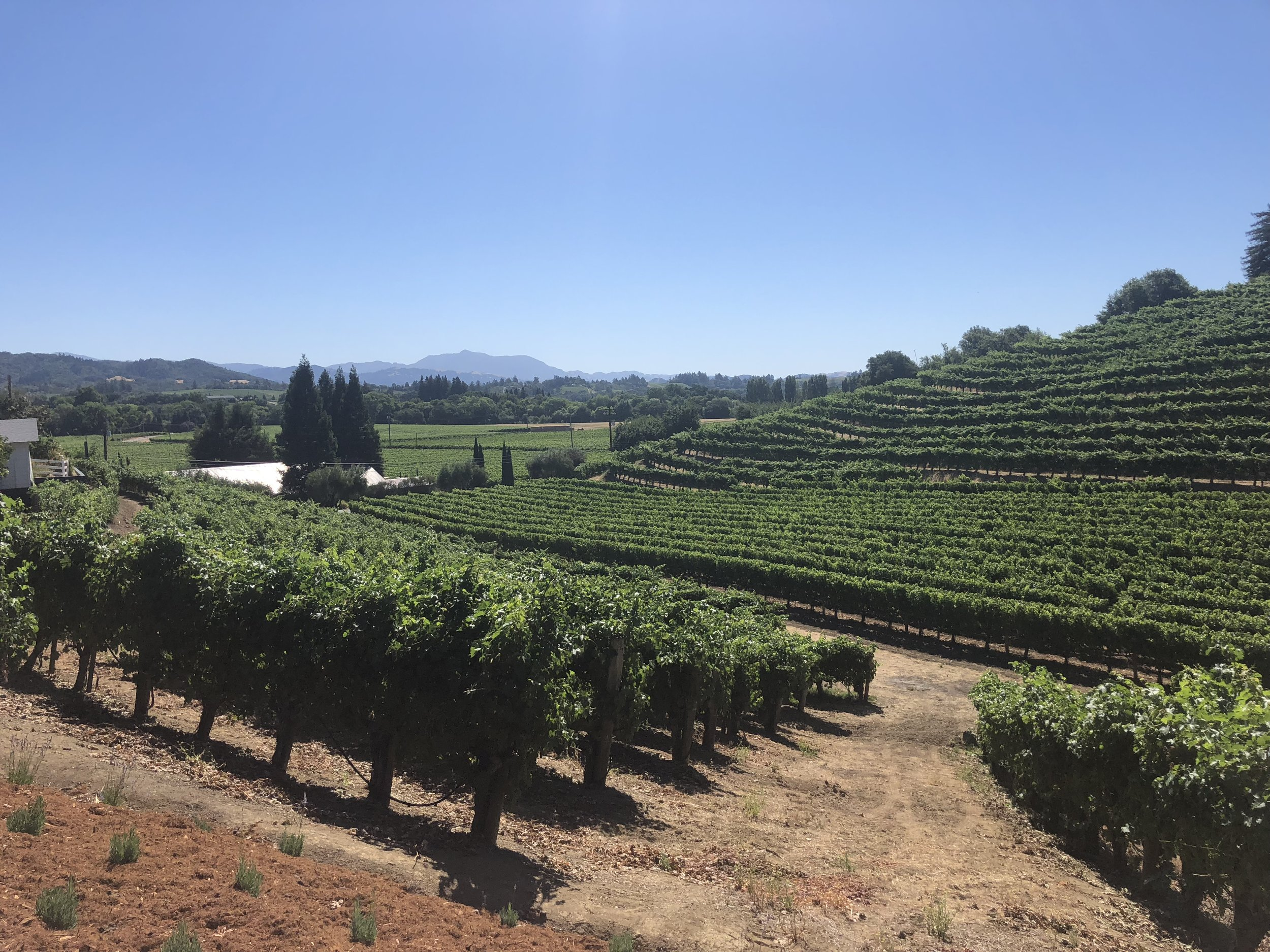 Rafanelli Winery Views