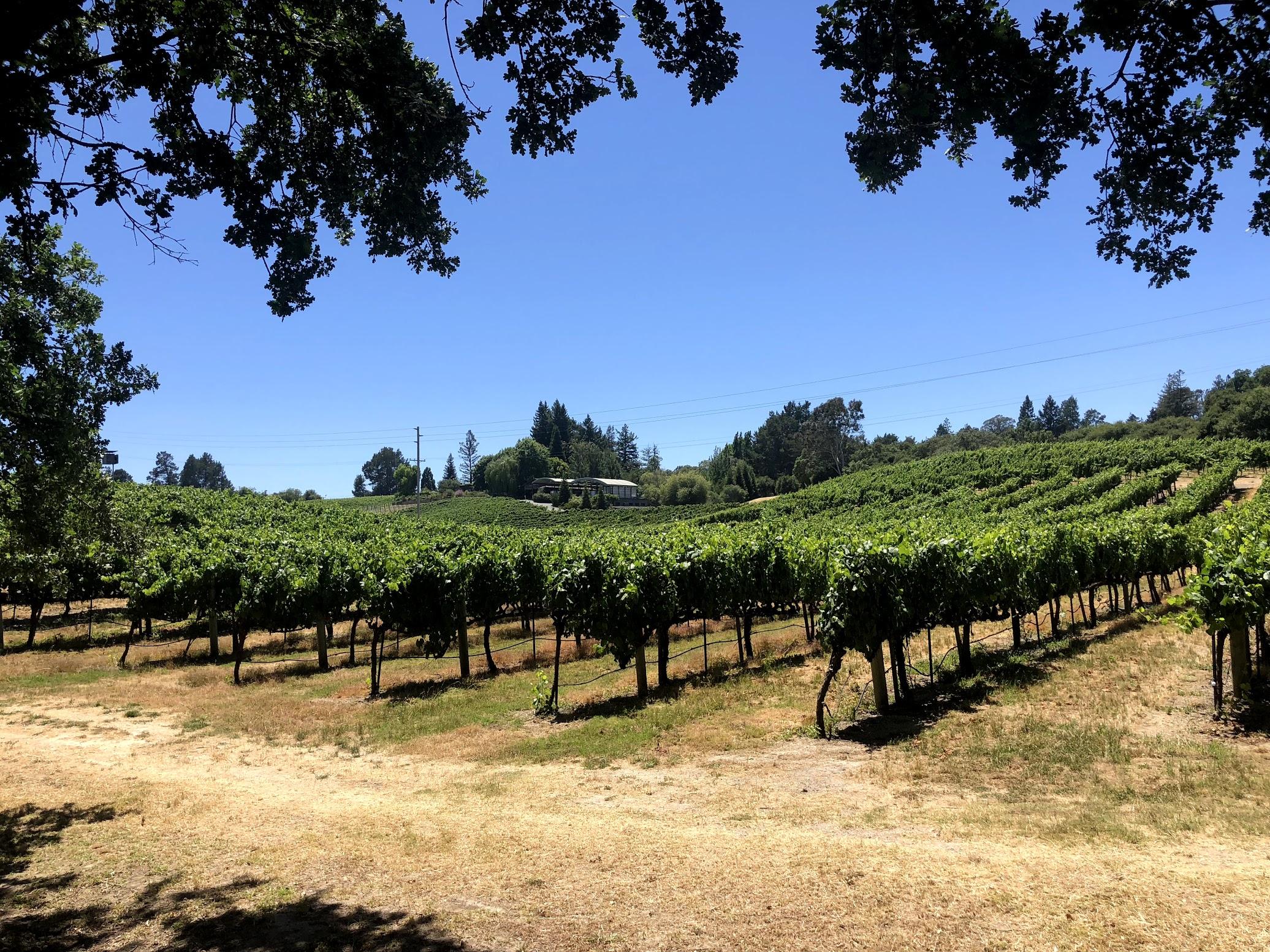 Lynmar Estate Pinot Vineyard Views