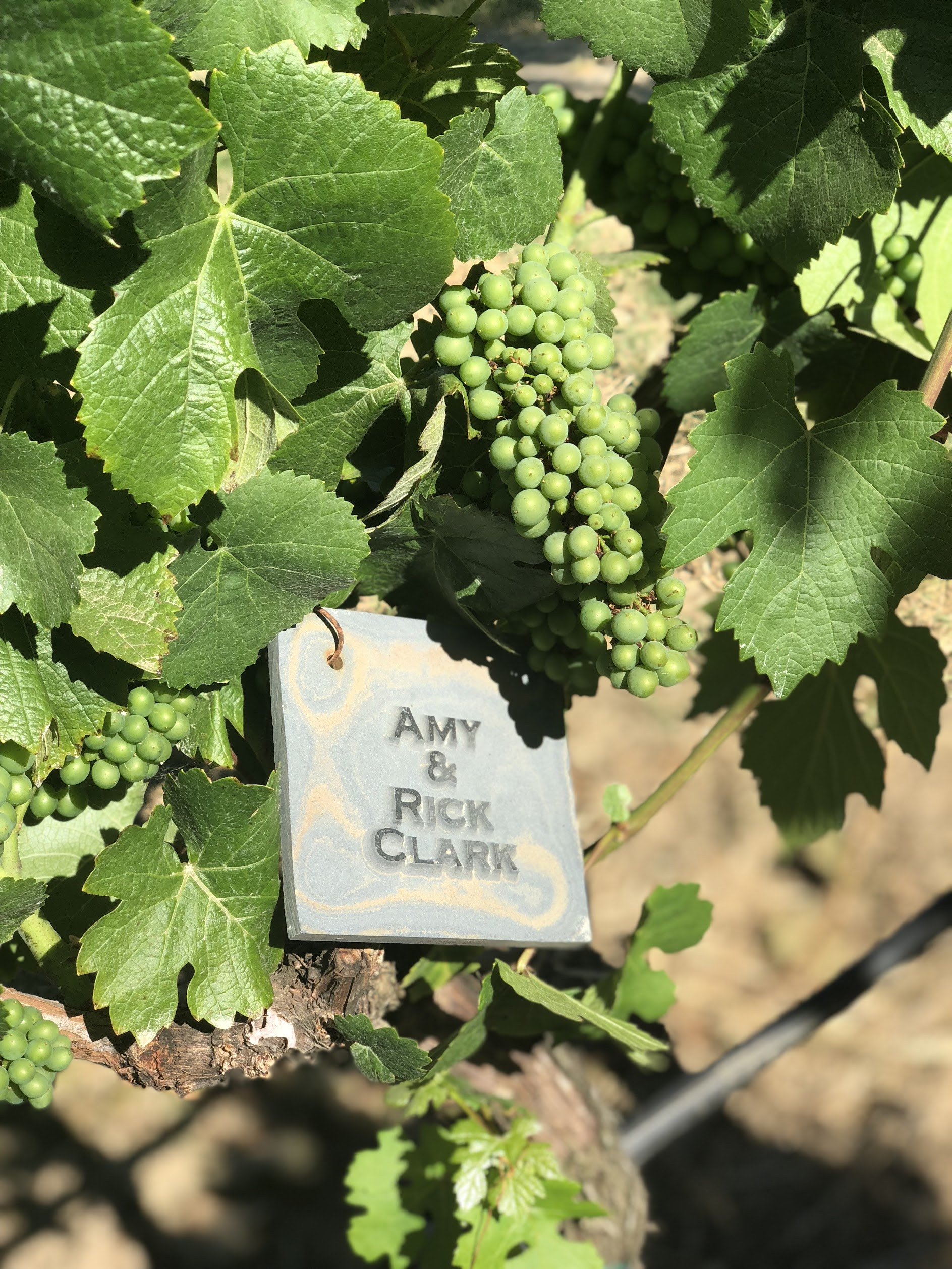 Gracianna Vineyard Medallion