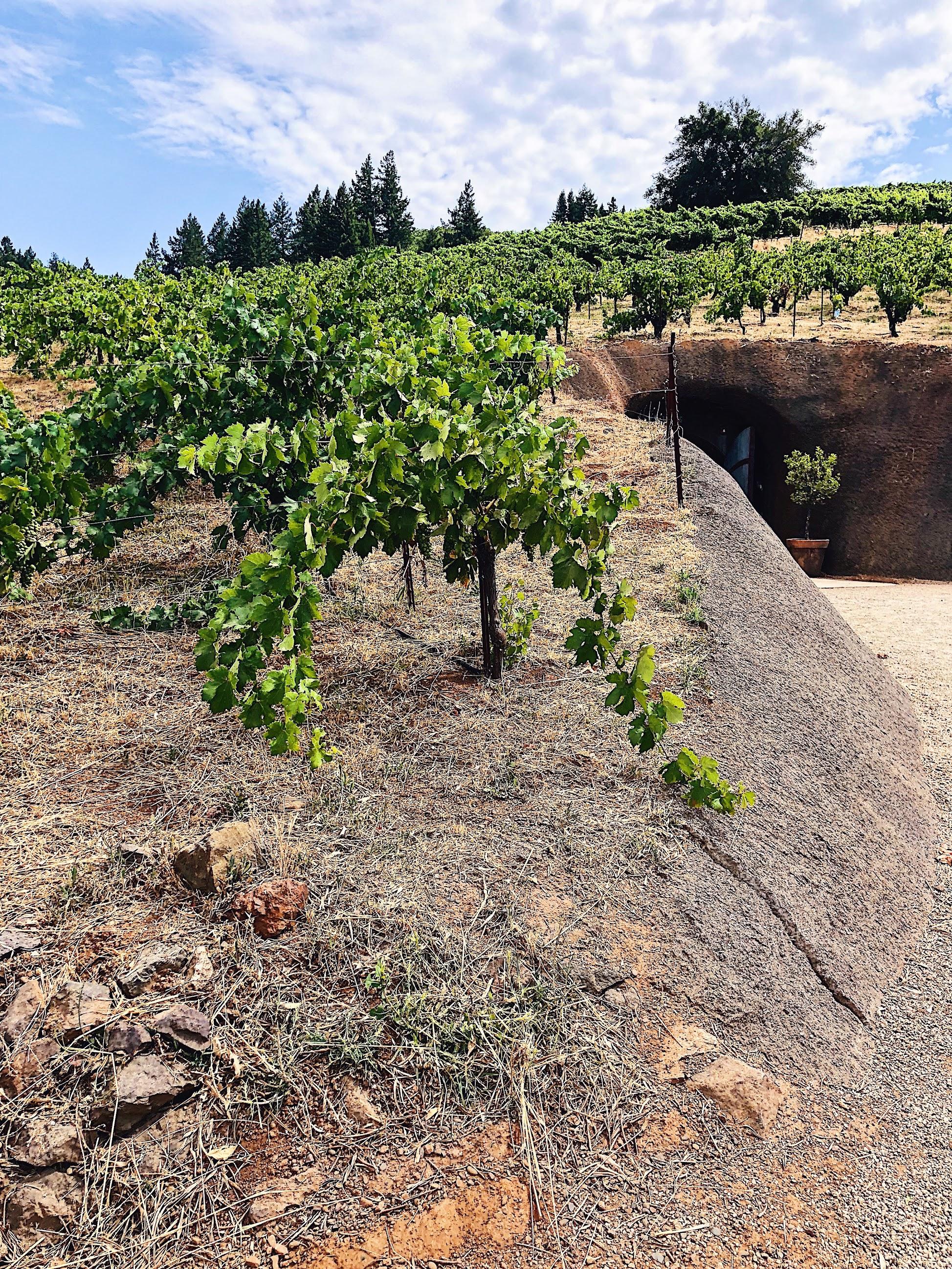 Bella Vineyards Old Vine Zinfandel