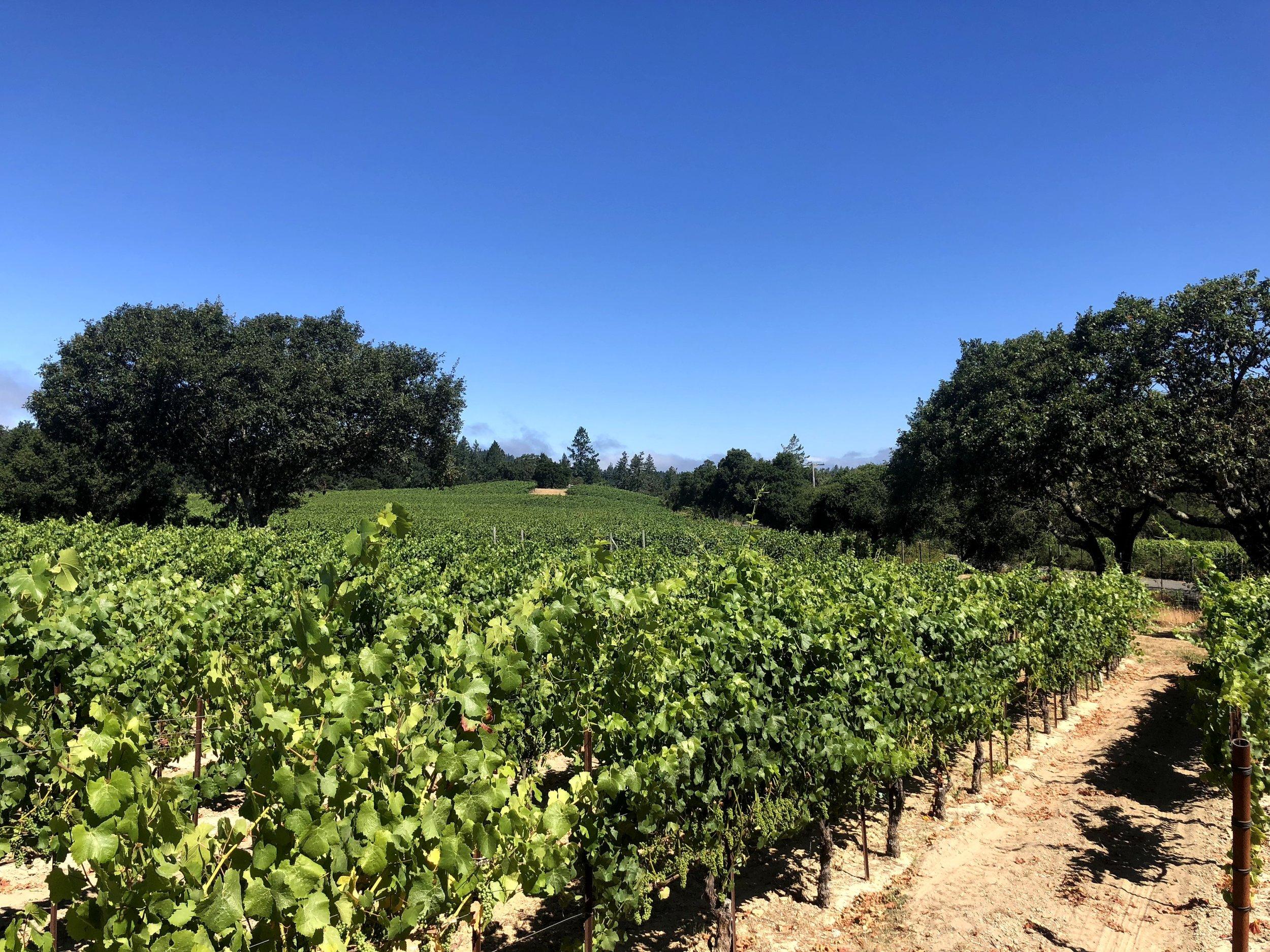 Sonoma Coast Square Peg Dry Farmed Pinot Noir