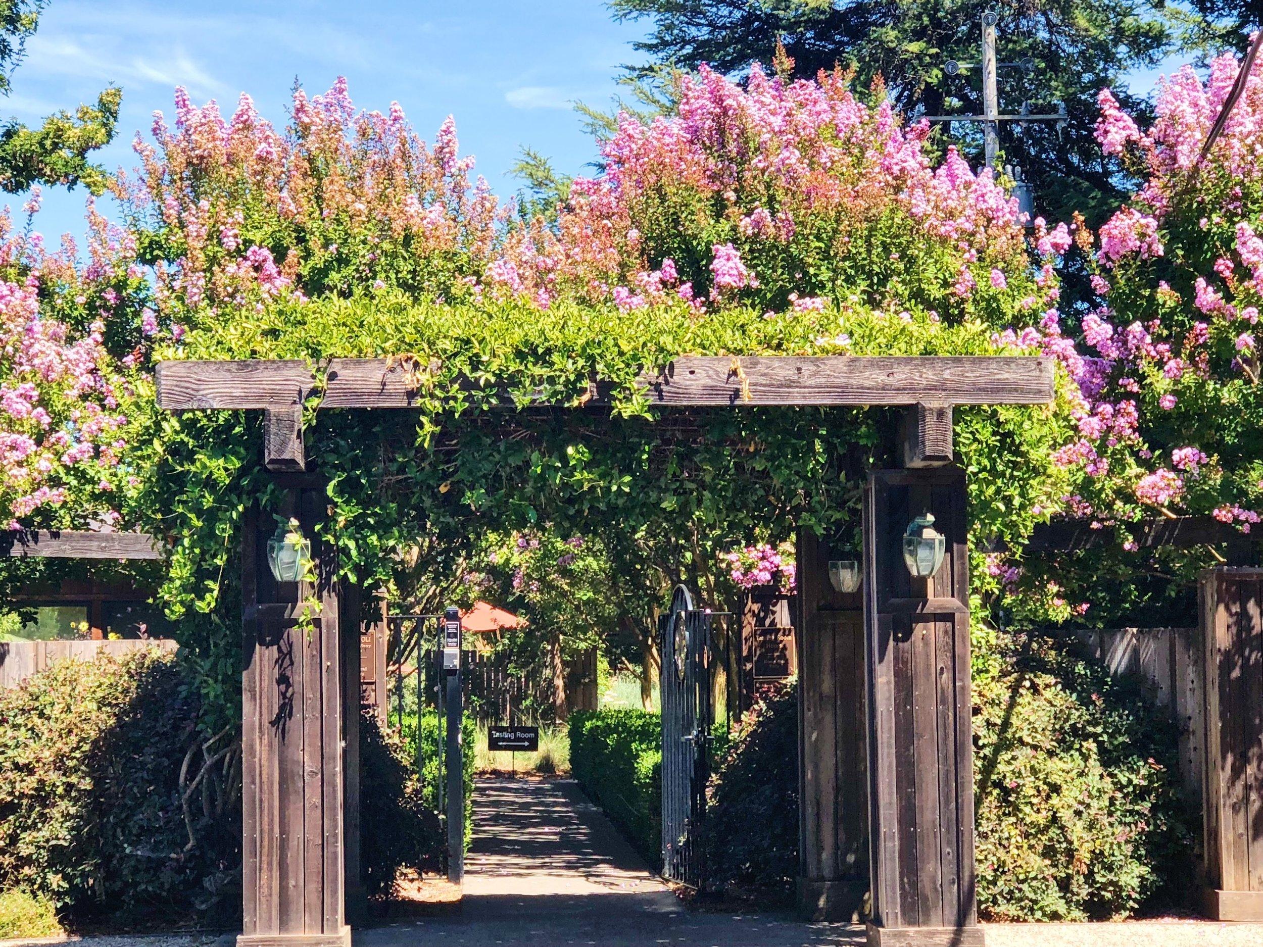 Rochioli Winery Flowers Blooming