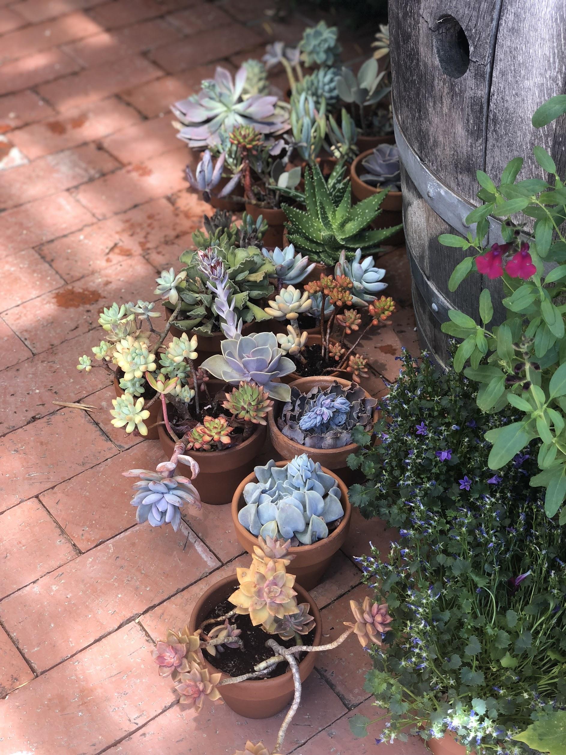 32 Winds Succulents