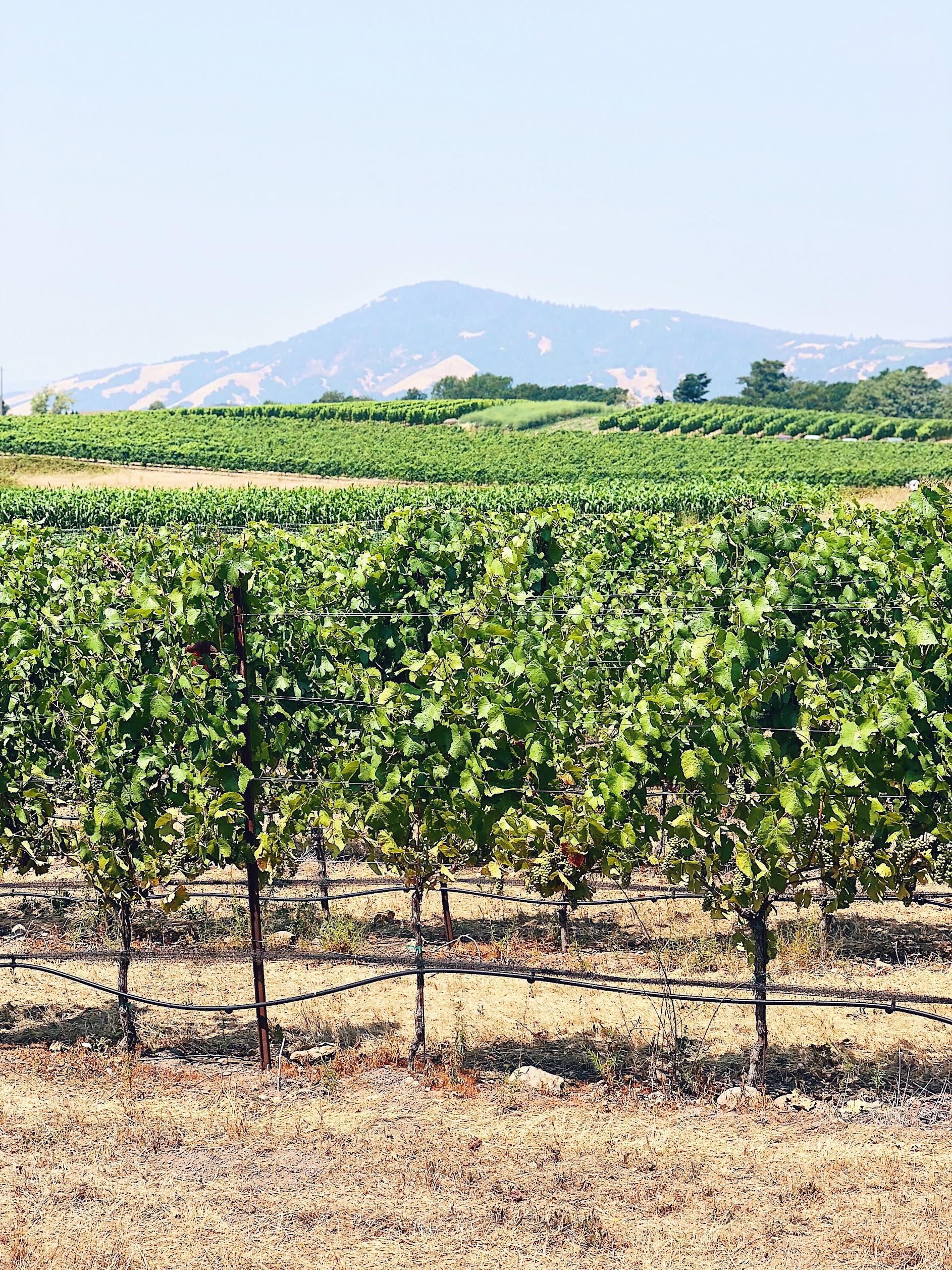 Belden Barns Vineyards