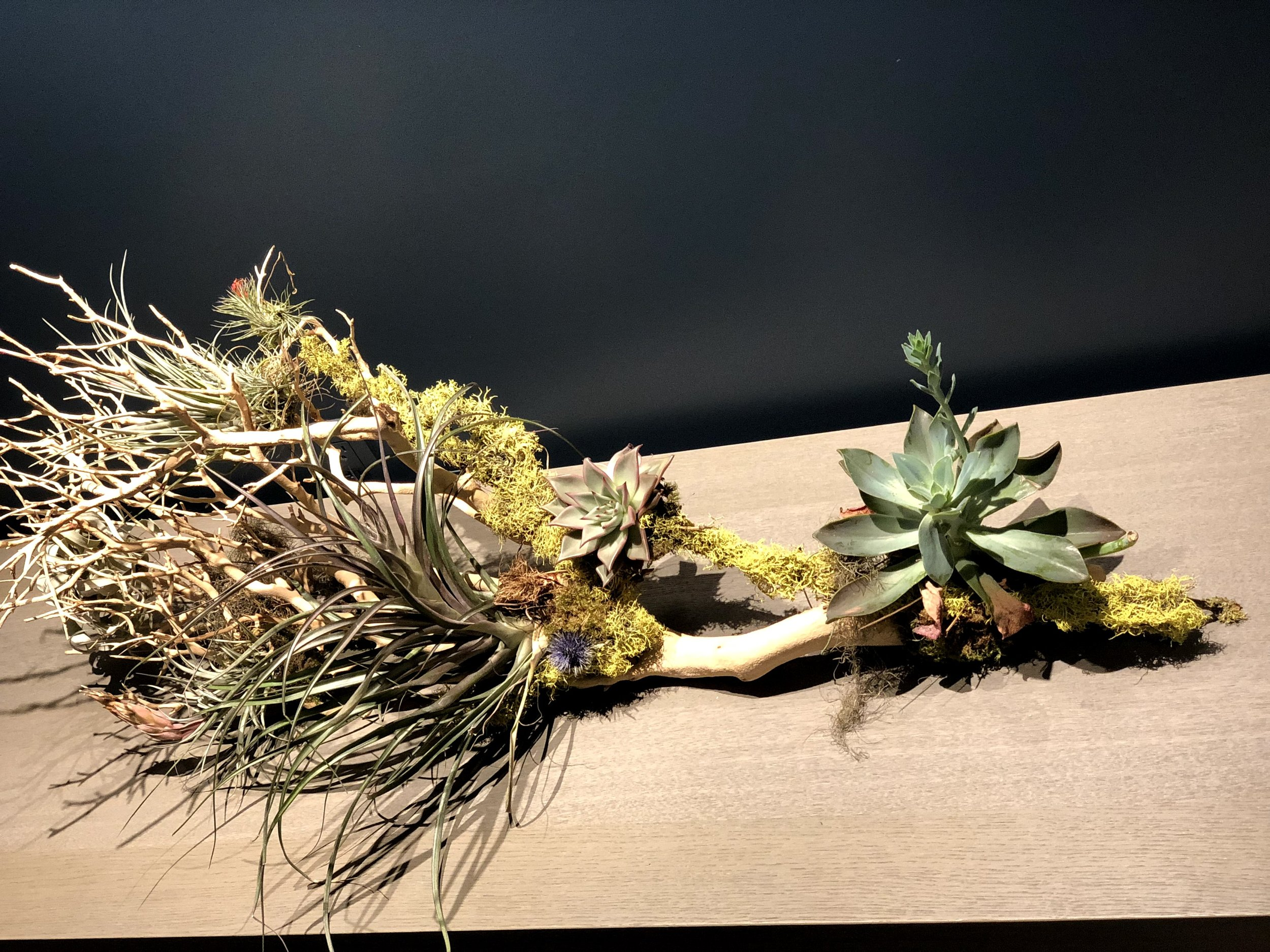 Winery Air Plants And Succulents