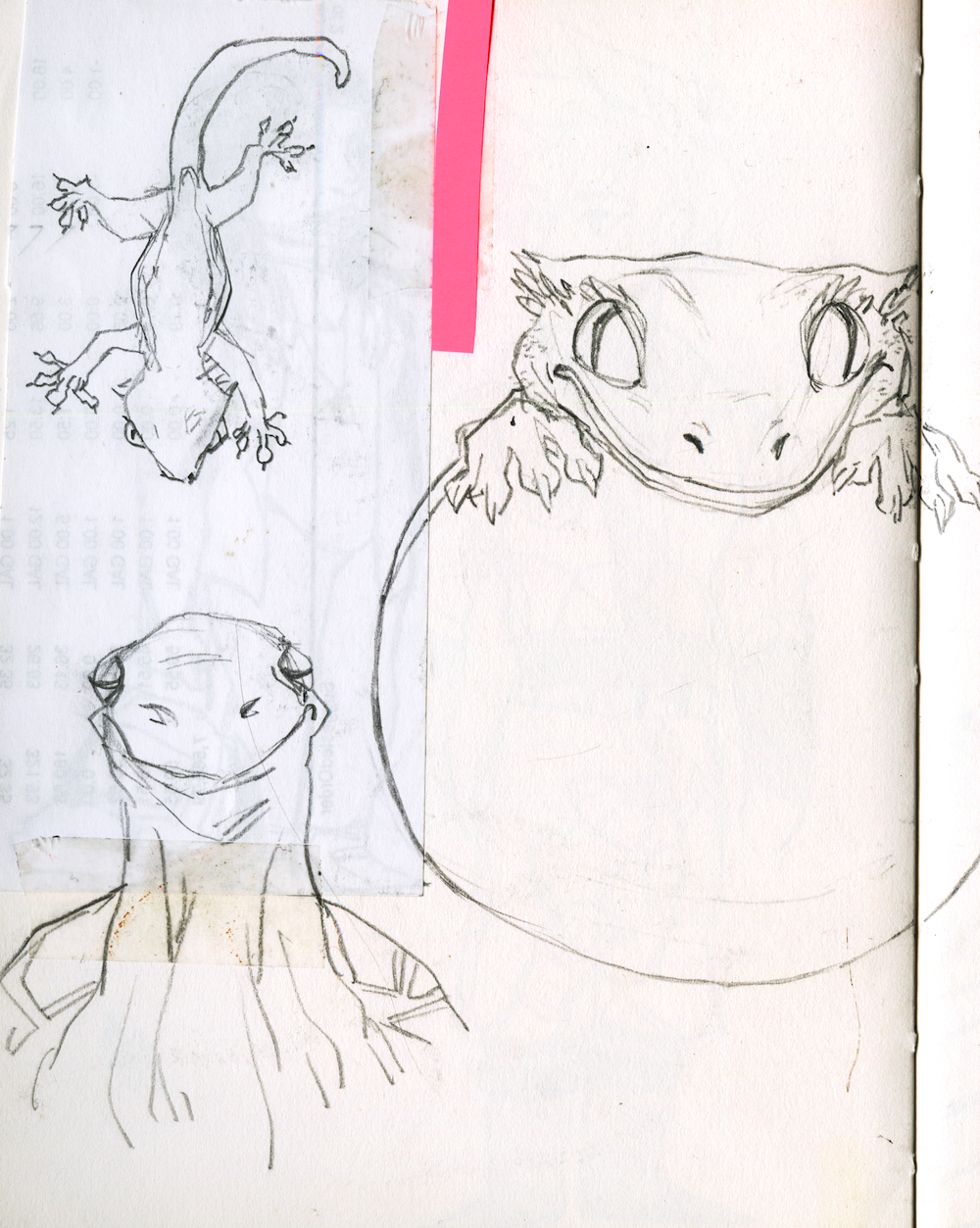 reptiles+copy.png