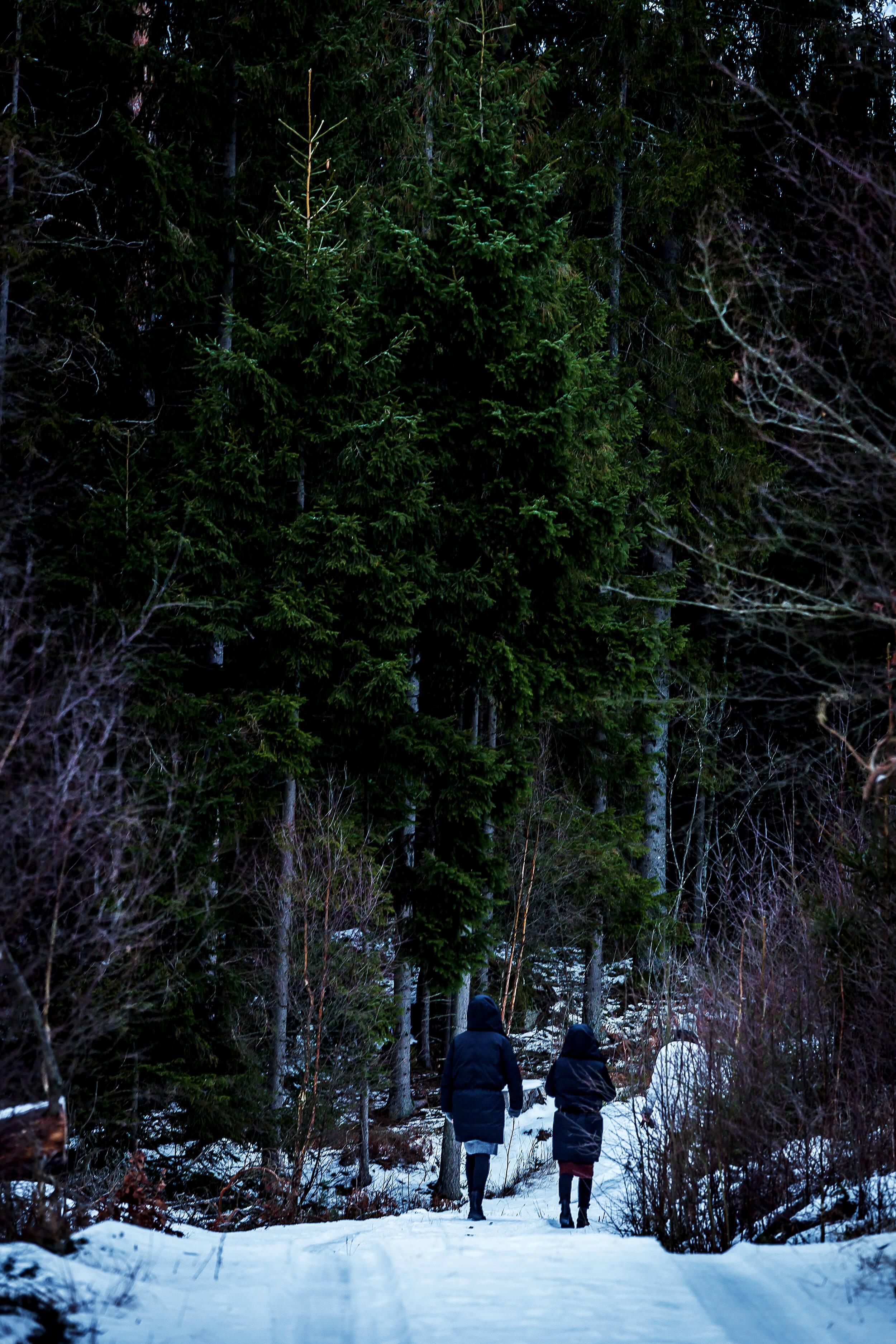 Sweden_skov_web-2.jpg