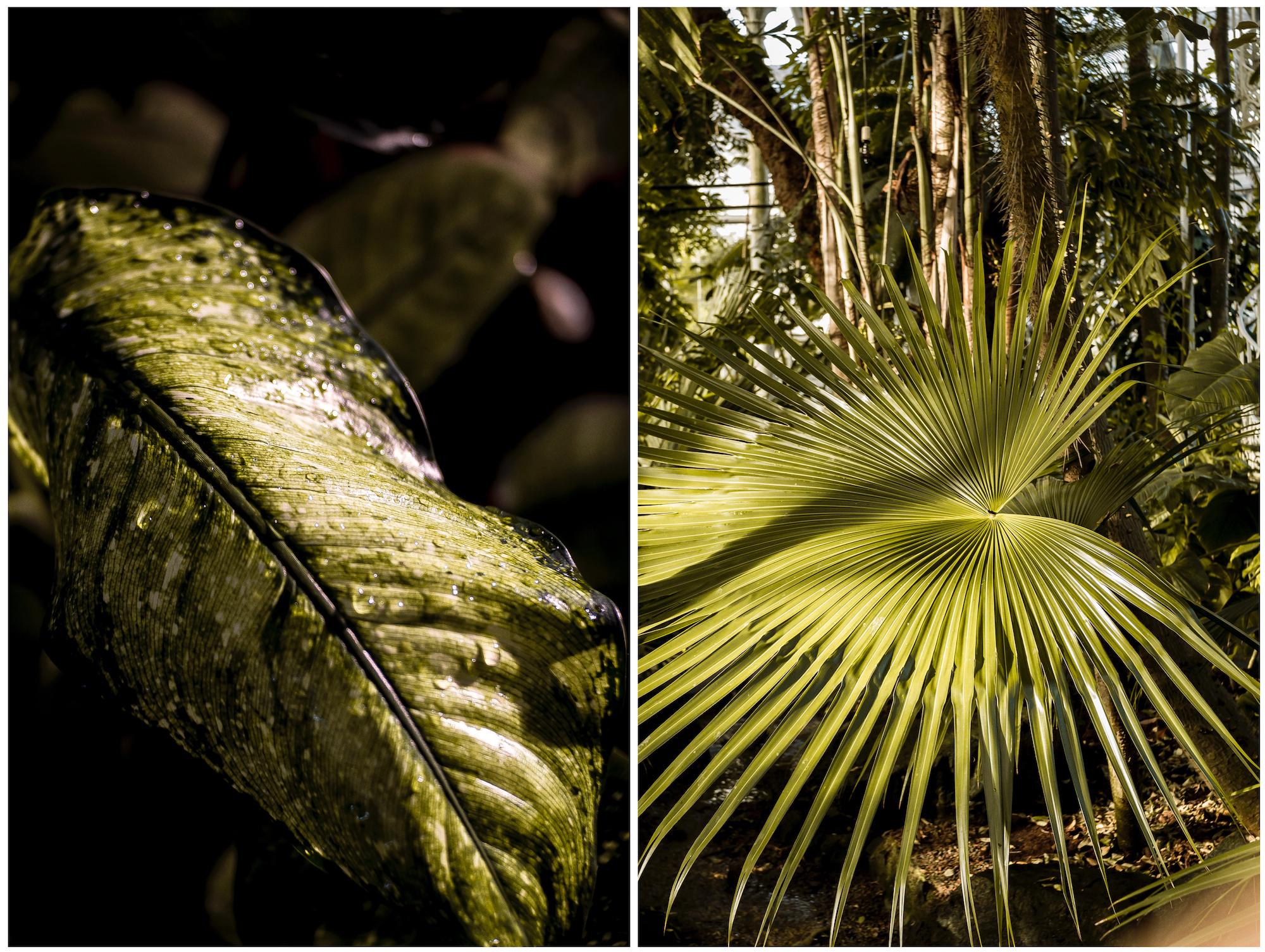 botanical.jpg