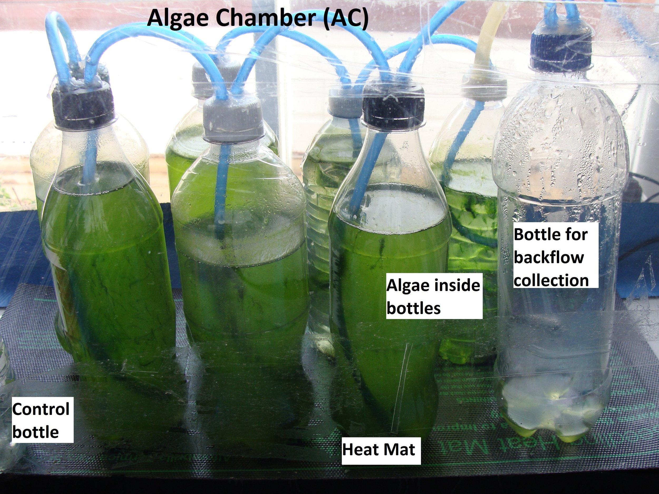 Figure 3. Algae chambers (AC).