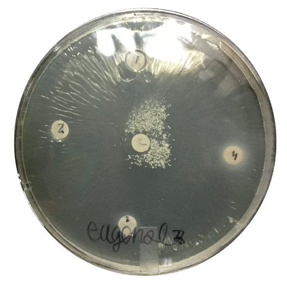Figure 5. Example Petri dish with EU and oral bacteria.