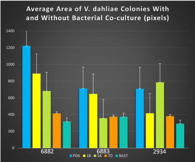 Figure 2. Combined bar graph of the average area of V. dahliae colonies seven days post-inoculation.