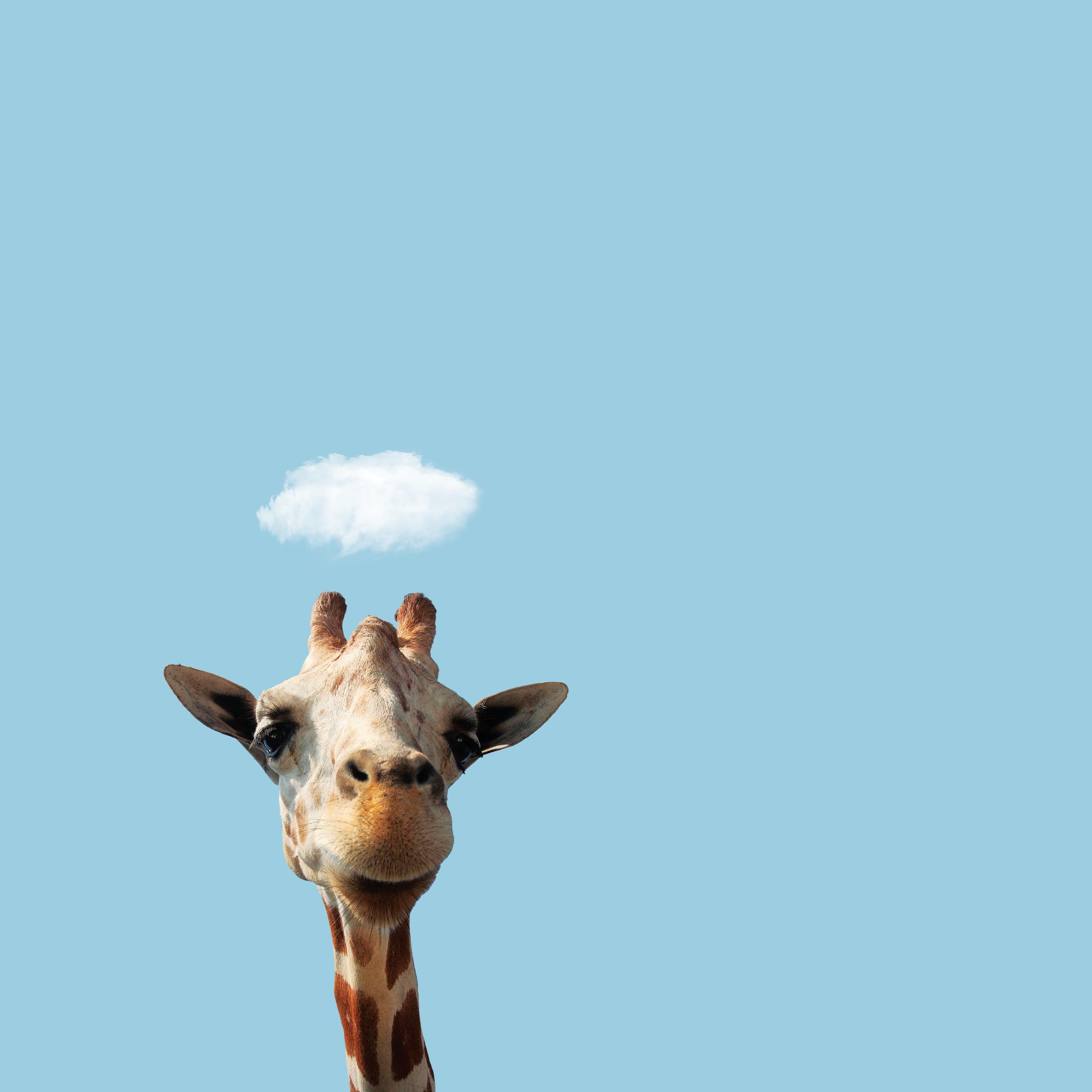 Le-Petit-Cloud--_-Hello!.png