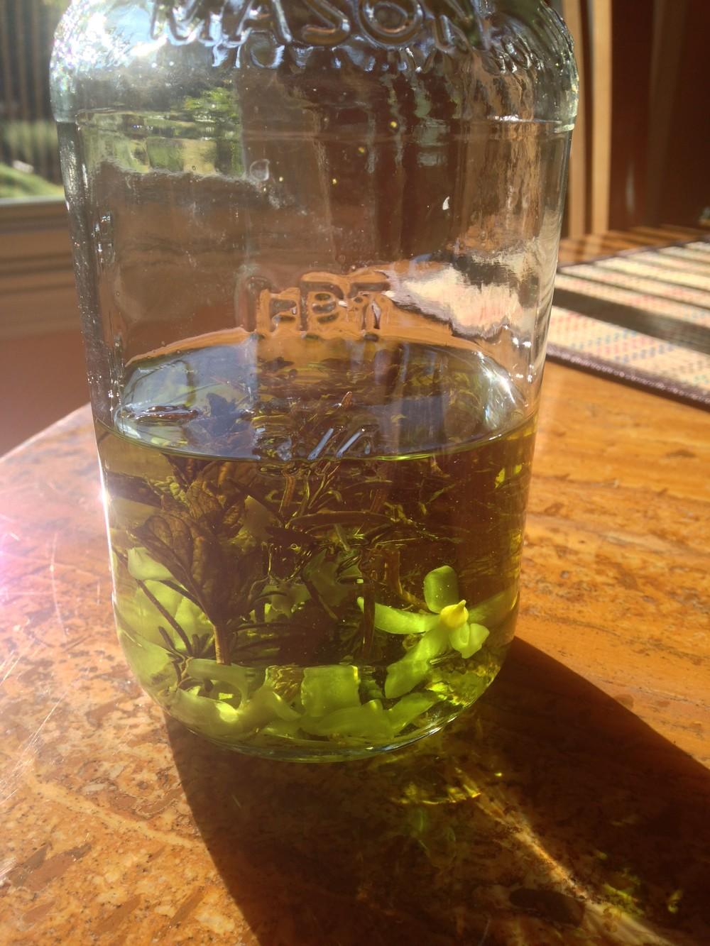 Lemon Blossom mix tincture (2nd day)