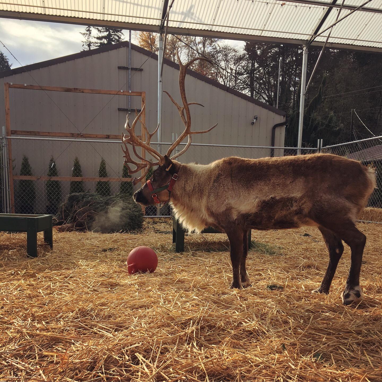 Watson Nursery Reindeer
