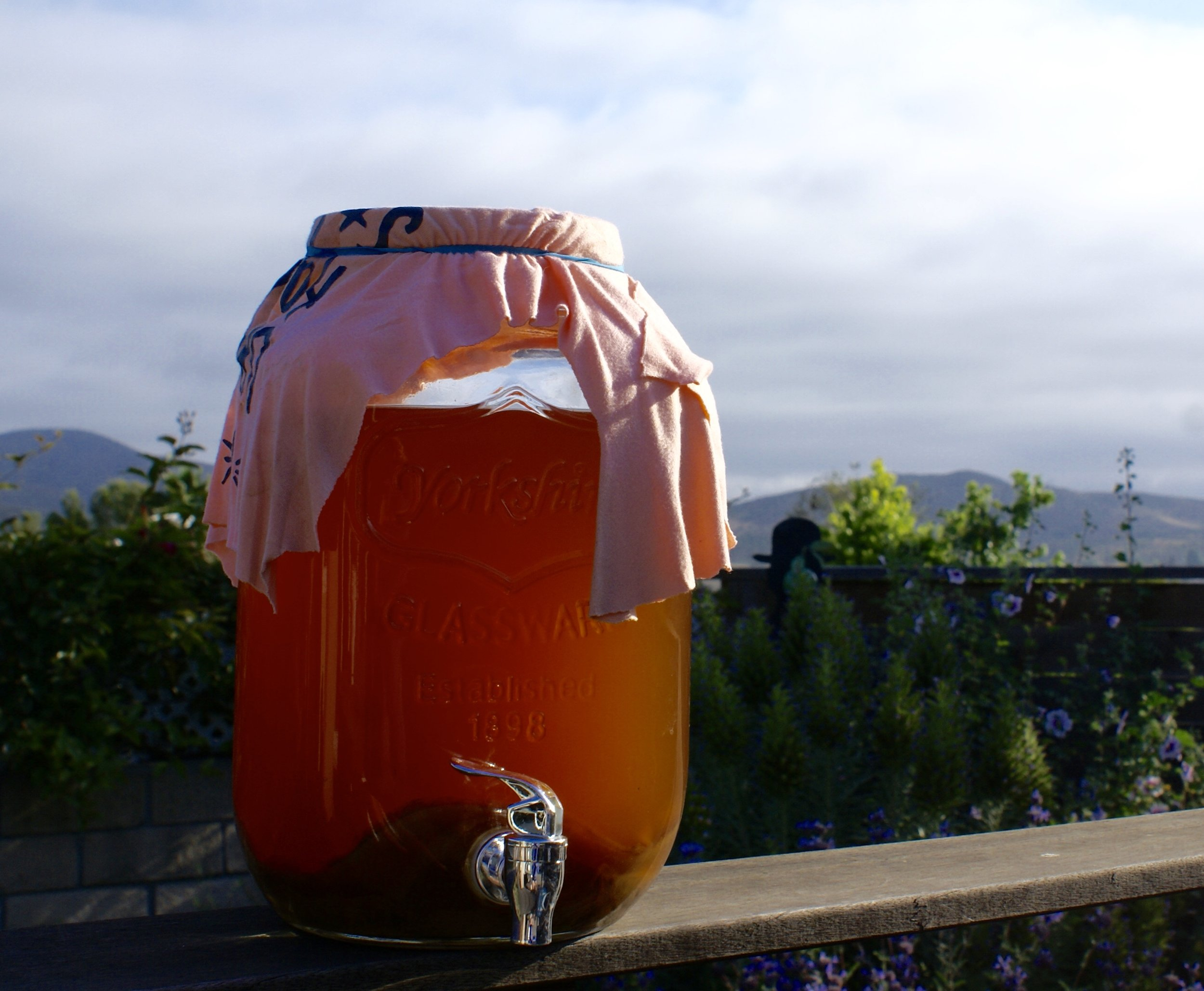 kombucha mother scoby with a vanlife view
