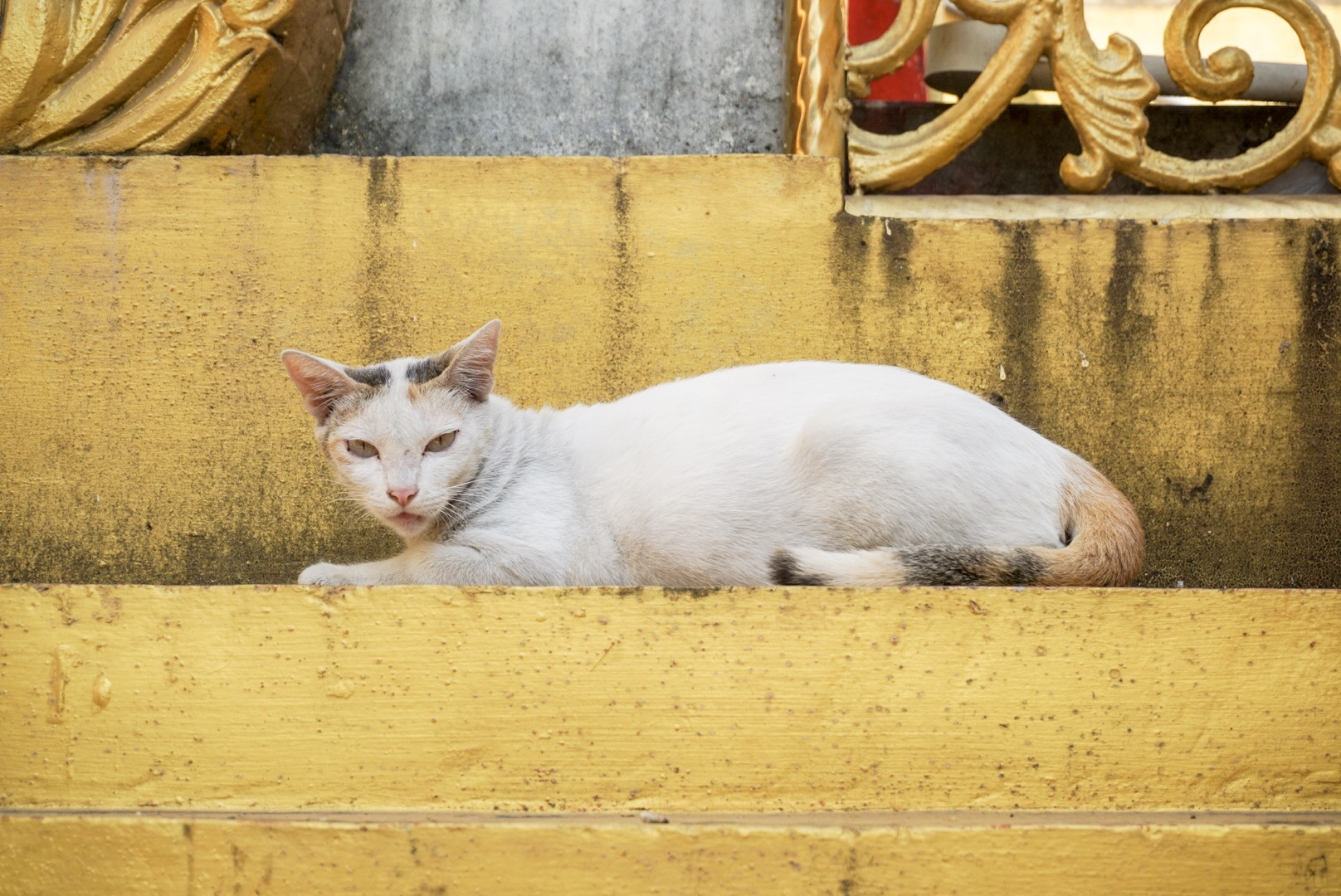There're lots of cats walking around the pagoda