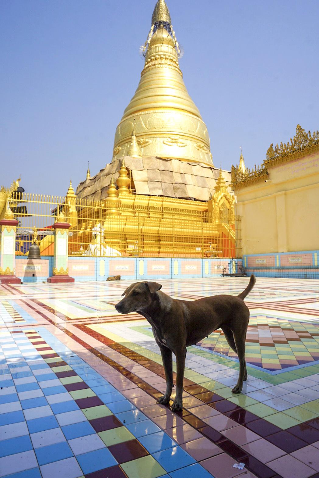 CocoGigiDesign - Myanmar2018_2979.JPG