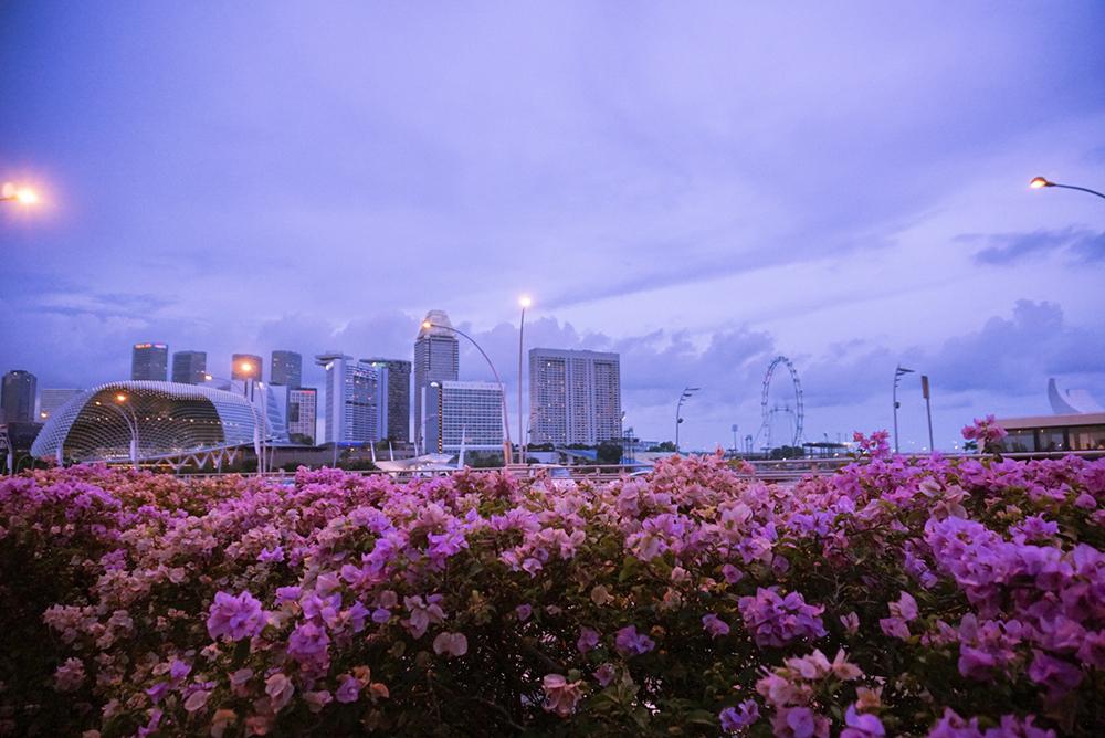 Gina Maldonado - cocogigidesing - Singapore_6429.jpg