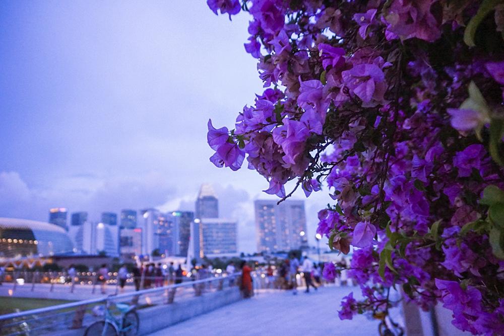 Gina Maldonado - cocogigidesing - Singapore_6431.jpg