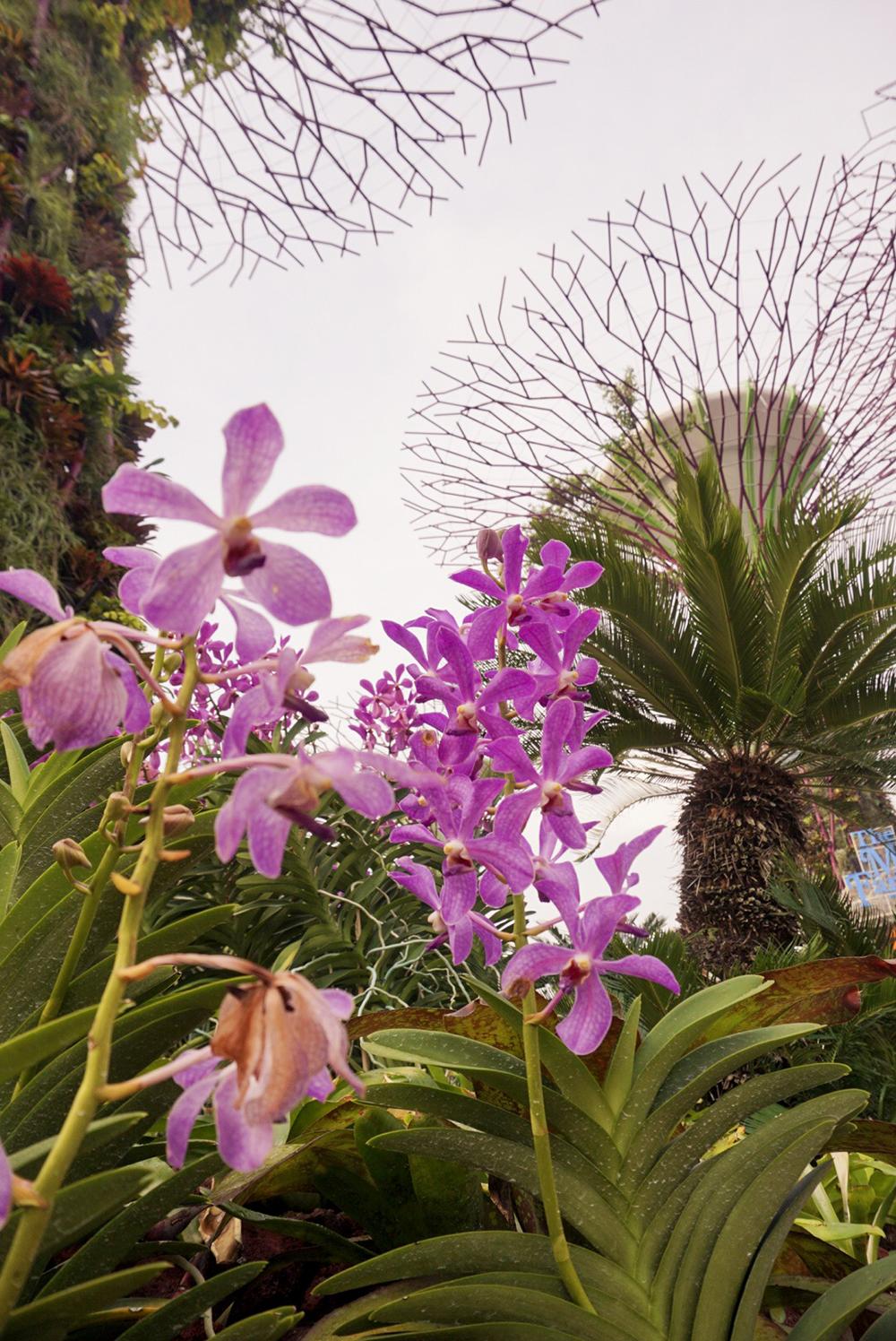 Gina Maldonado - cocogigidesing - Singapore_6867.jpg
