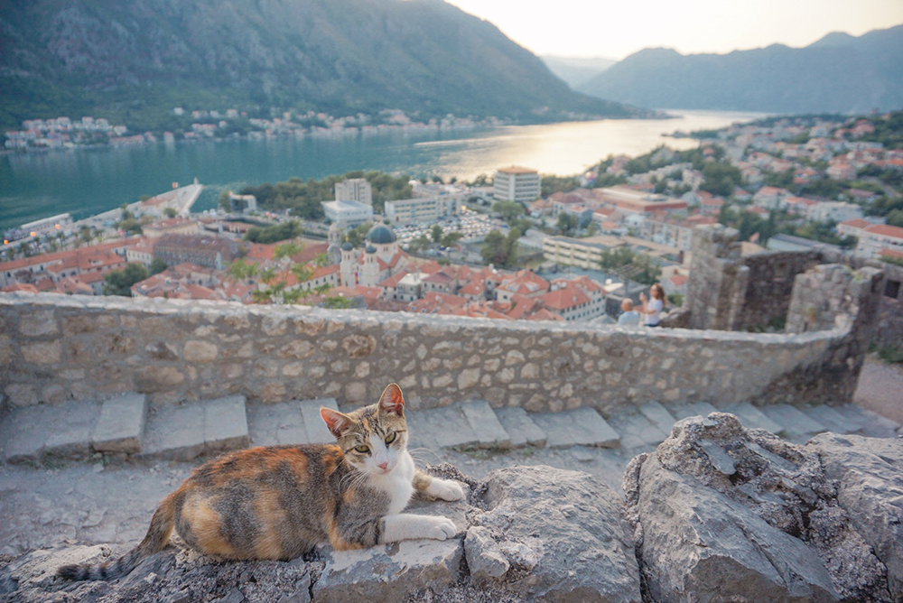 View of Kotor from the city walls