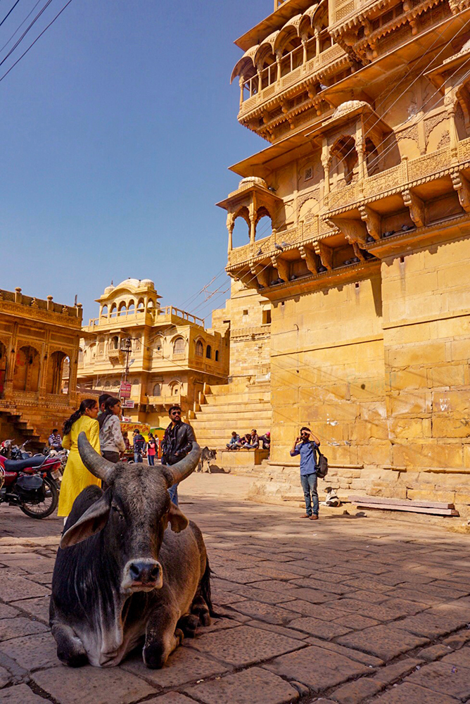 Sacred cow in front of Patwon Ki Haveli, Jaisalmer Fort