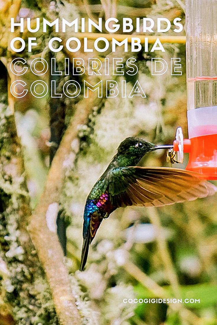 Hummingbirds of Colombia - Gina maldonado - Coco Gigi Design.JPG